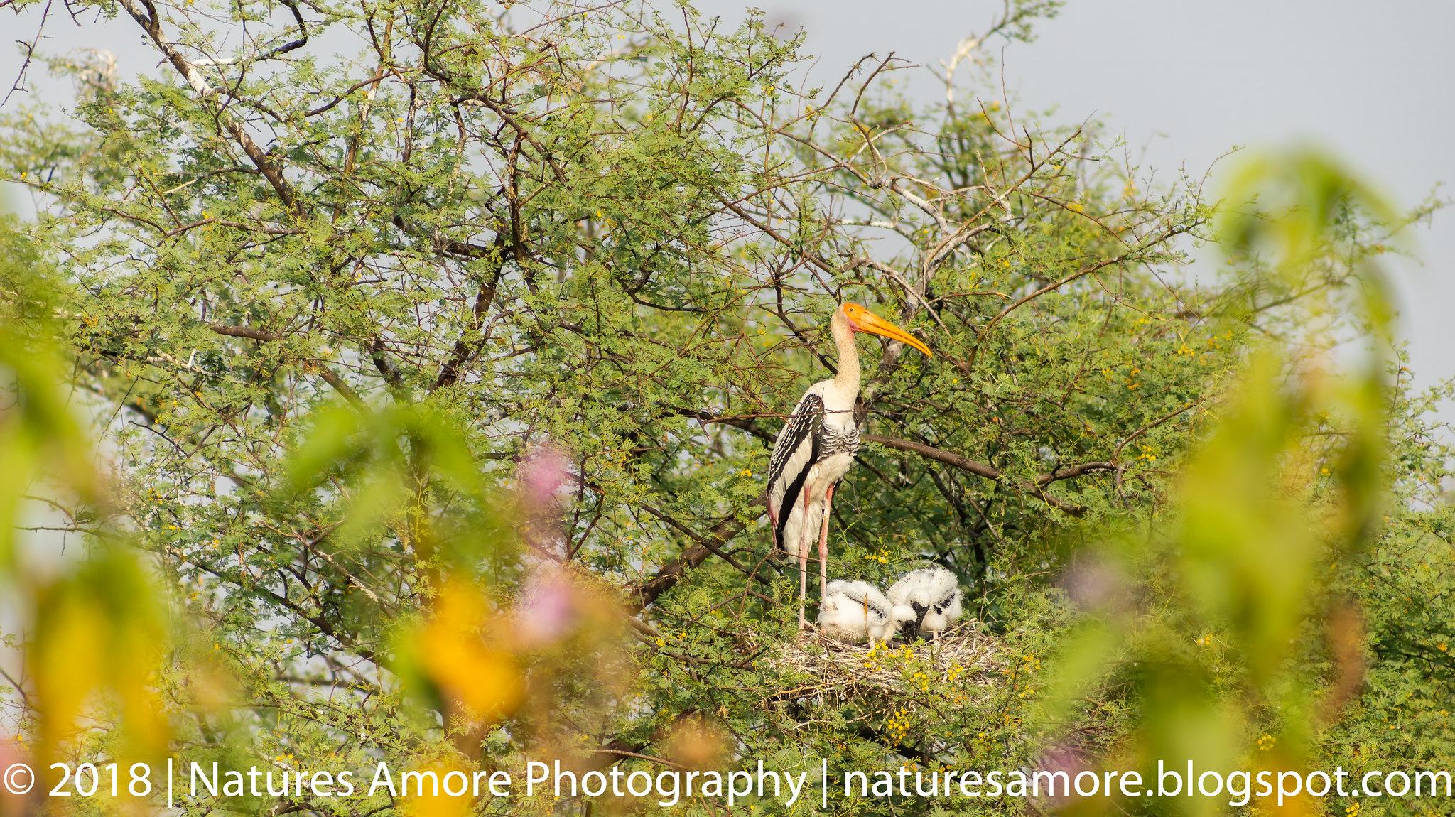 Bharatpur Bird Sanctuary-49