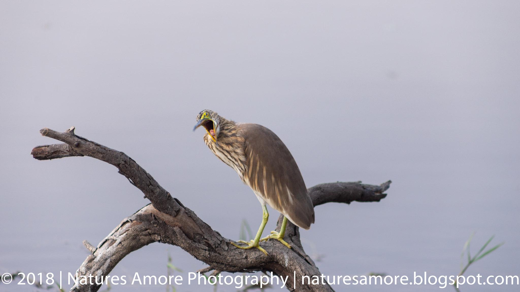 Bharatpur Bird Sanctuary-37