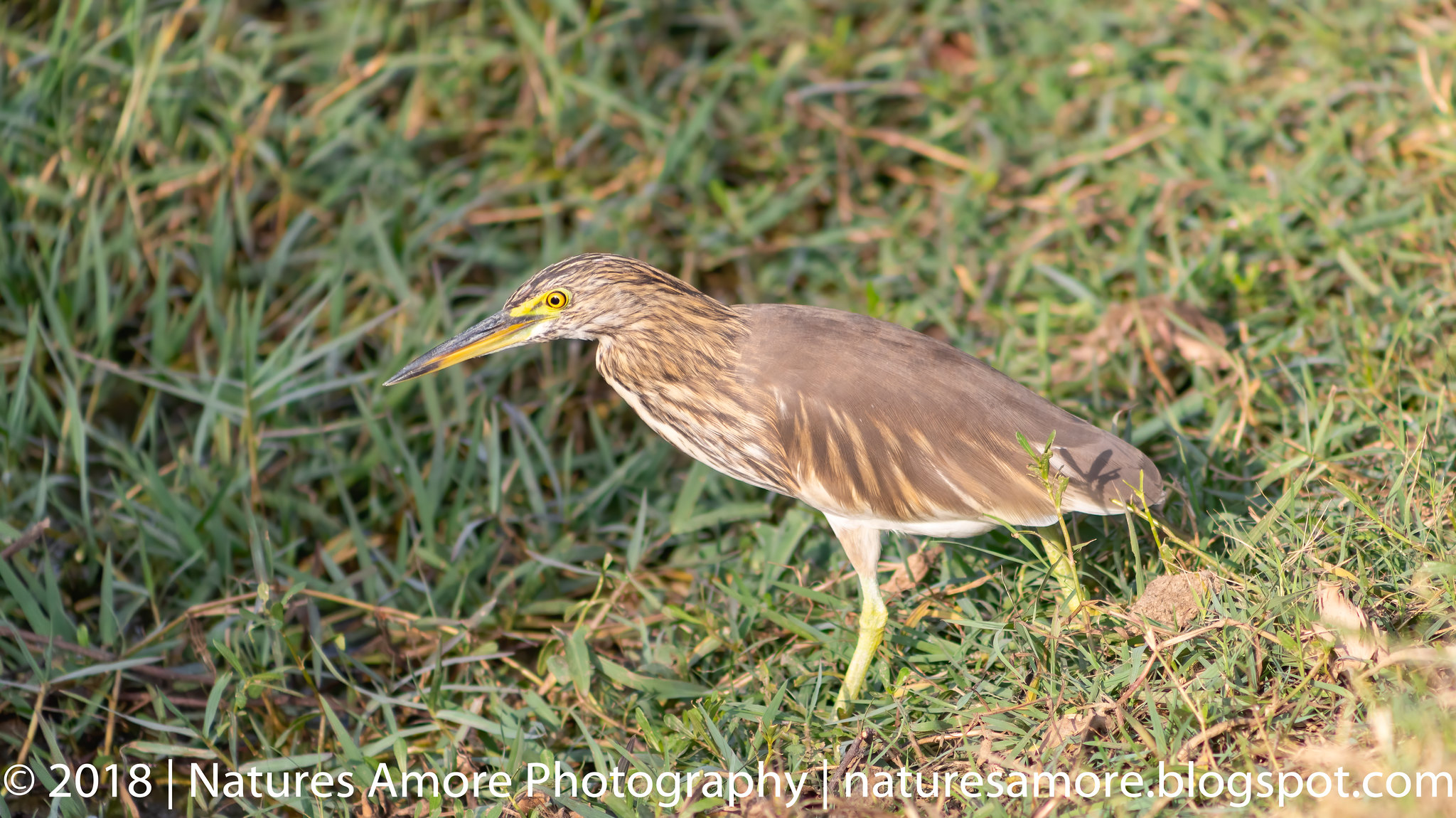 Bharatpur Bird Sanctuary-34
