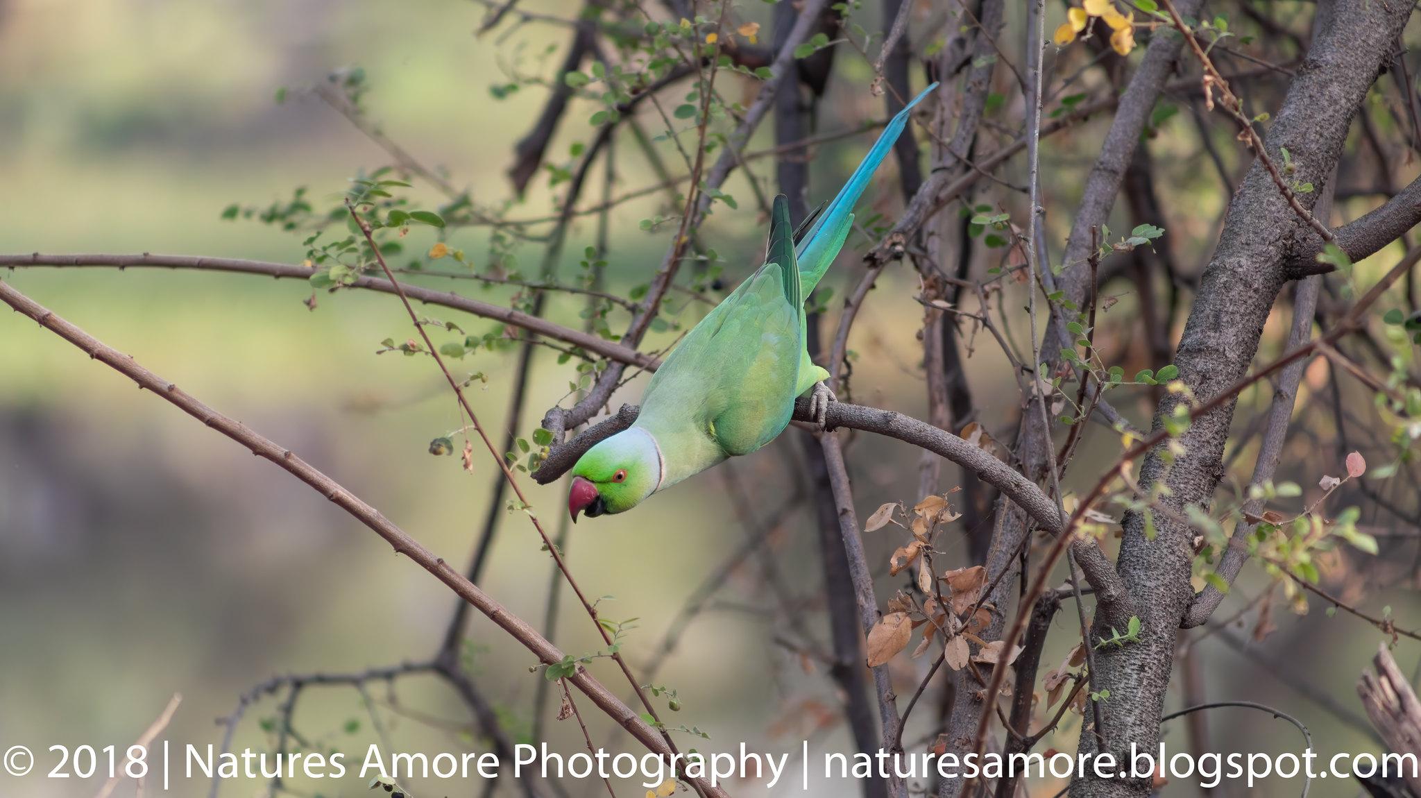Bharatpur Bird Sanctuary-31