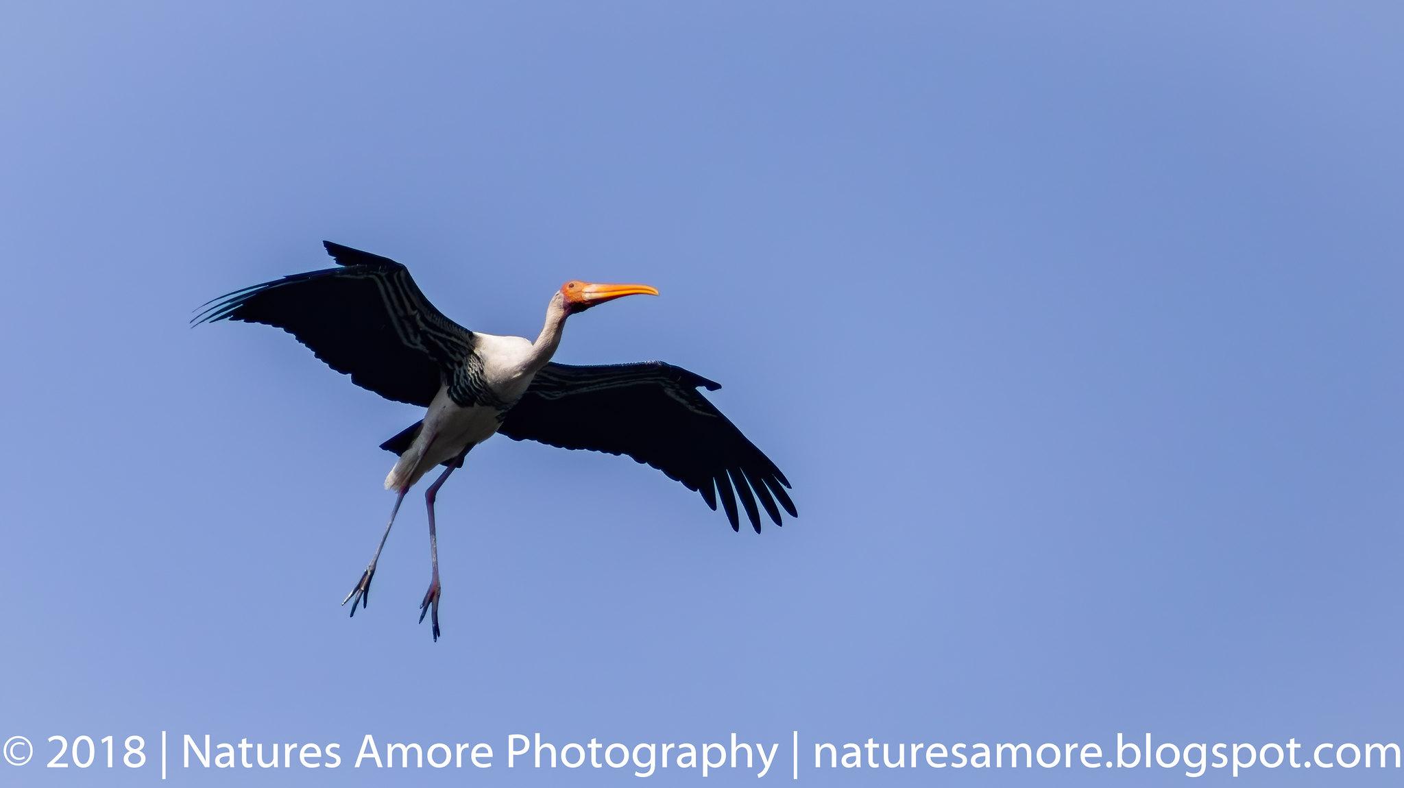 Bharatpur Bird Sanctuary-29