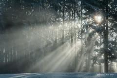 Brume et soleil d'hiver