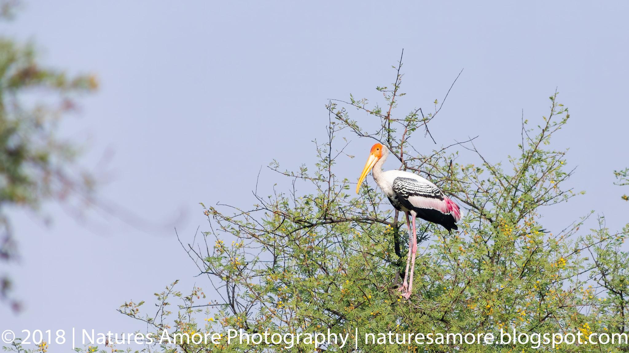 Bharatpur Bird Sanctuary-20