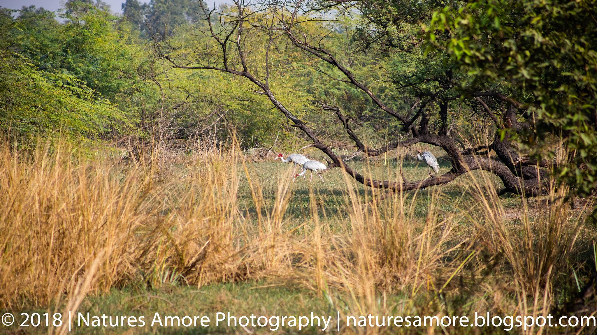 Bharatpur Bird Sanctuary-15