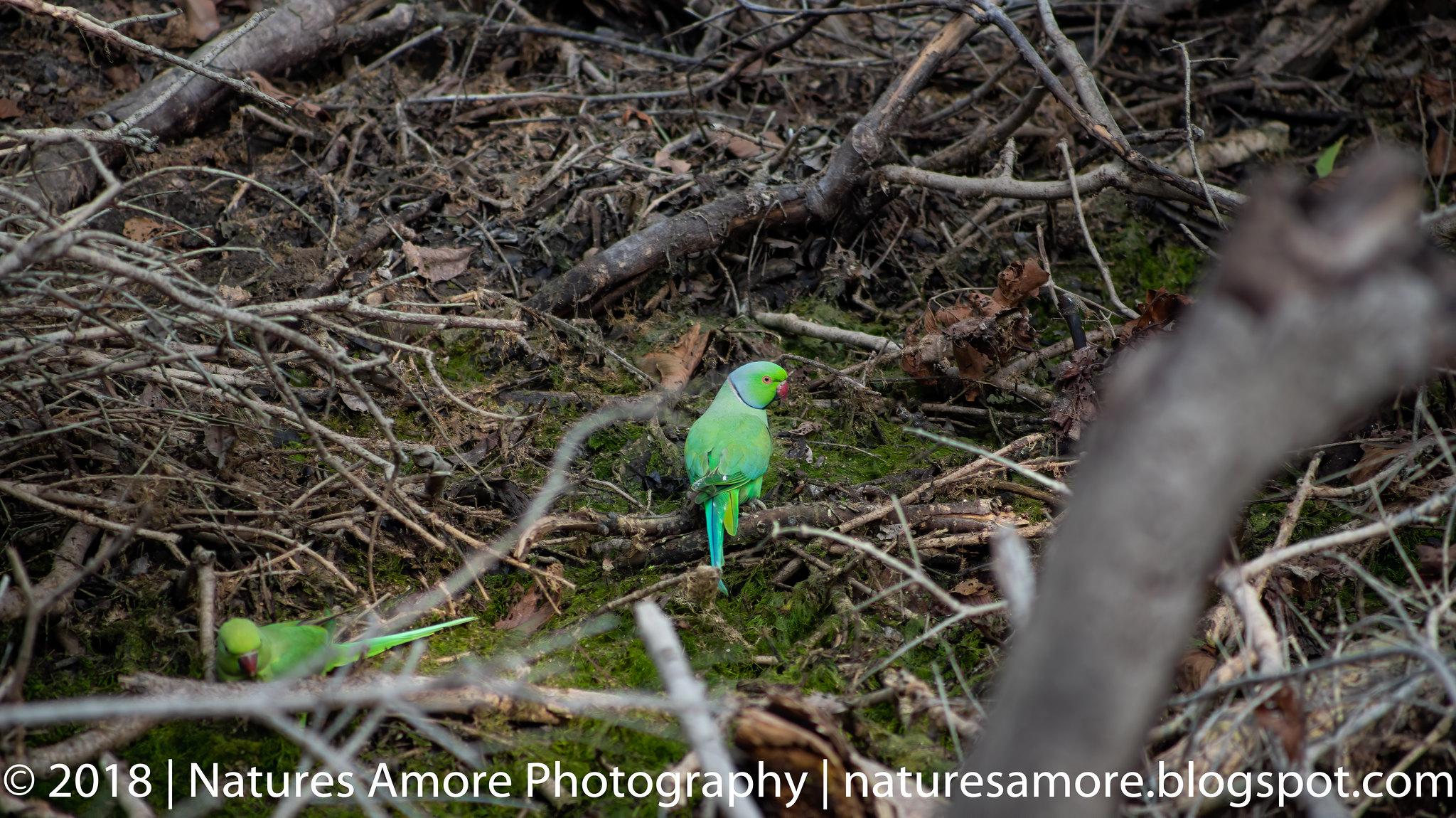 Bharatpur Bird Sanctuary-10