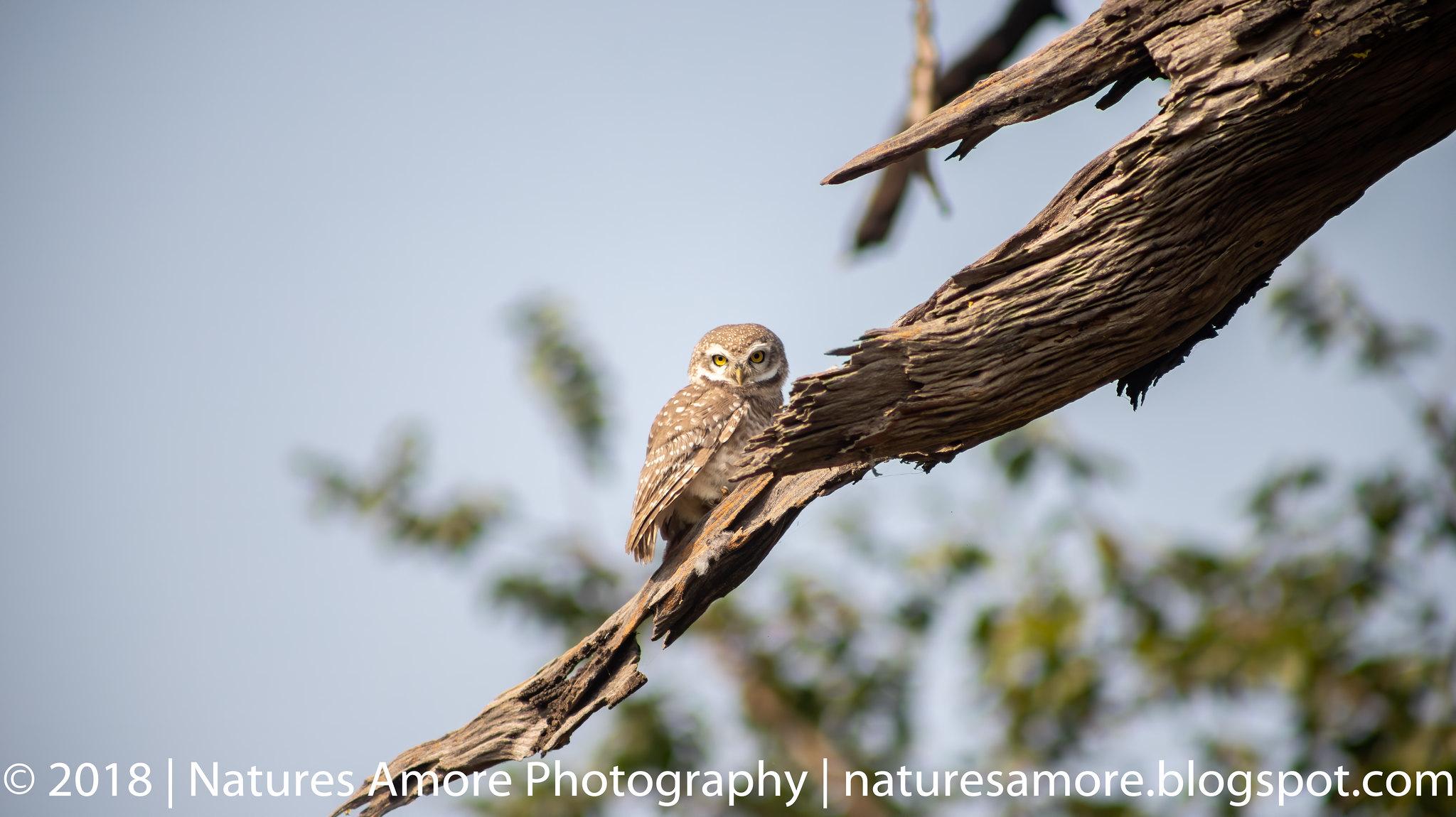 Bharatpur Bird Sanctuary-9