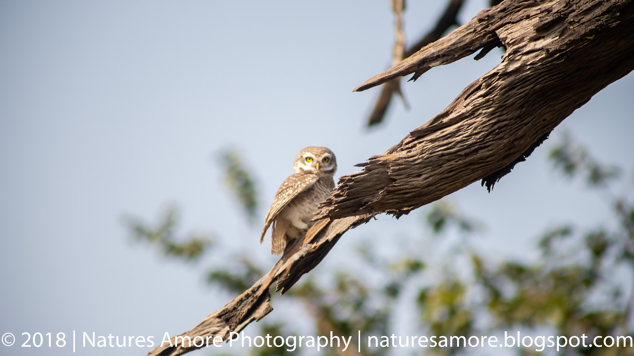 Bharatpur Bird Sanctuary-6