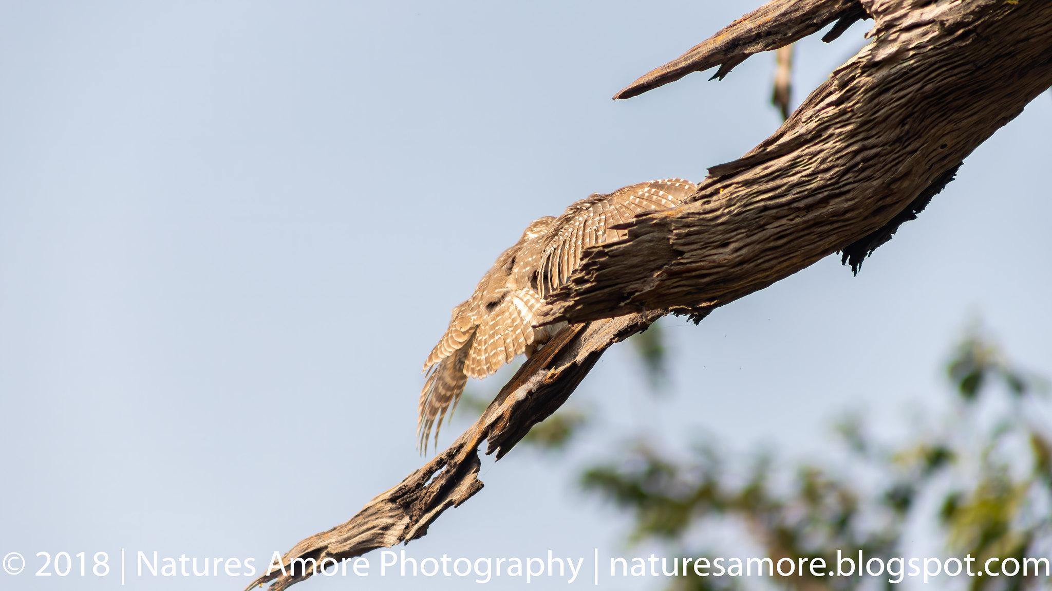 Bharatpur Bird Sanctuary-2