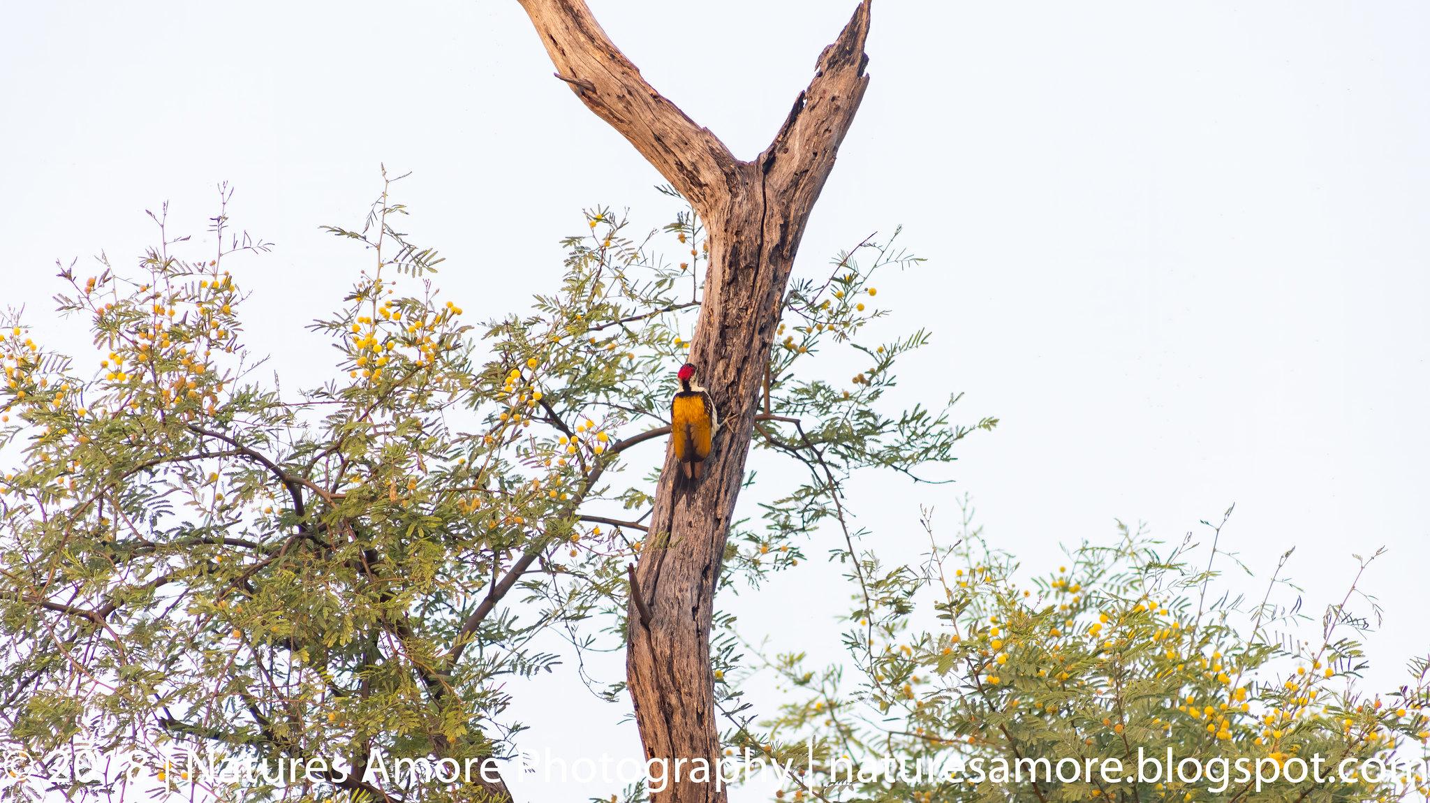 Bharatpur Bird Sanctuary-91
