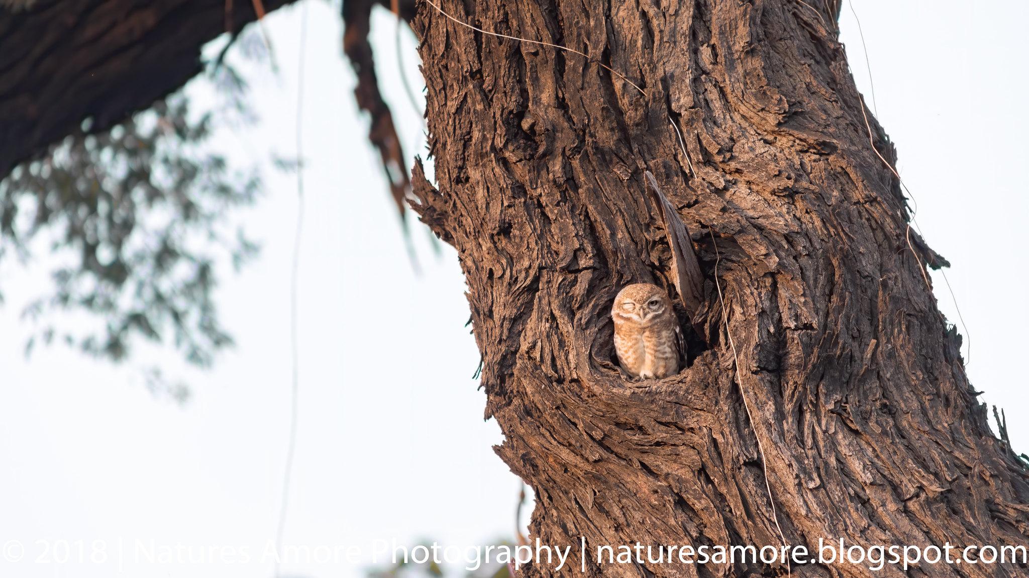 Bharatpur Bird Sanctuary-87