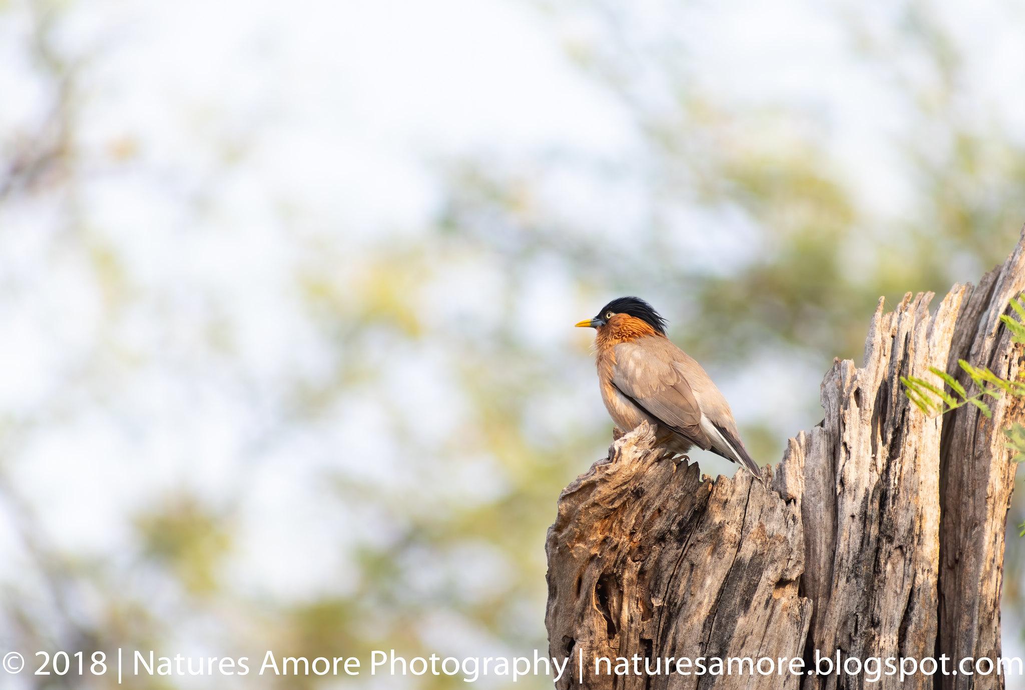 Bharatpur Bird Sanctuary-80