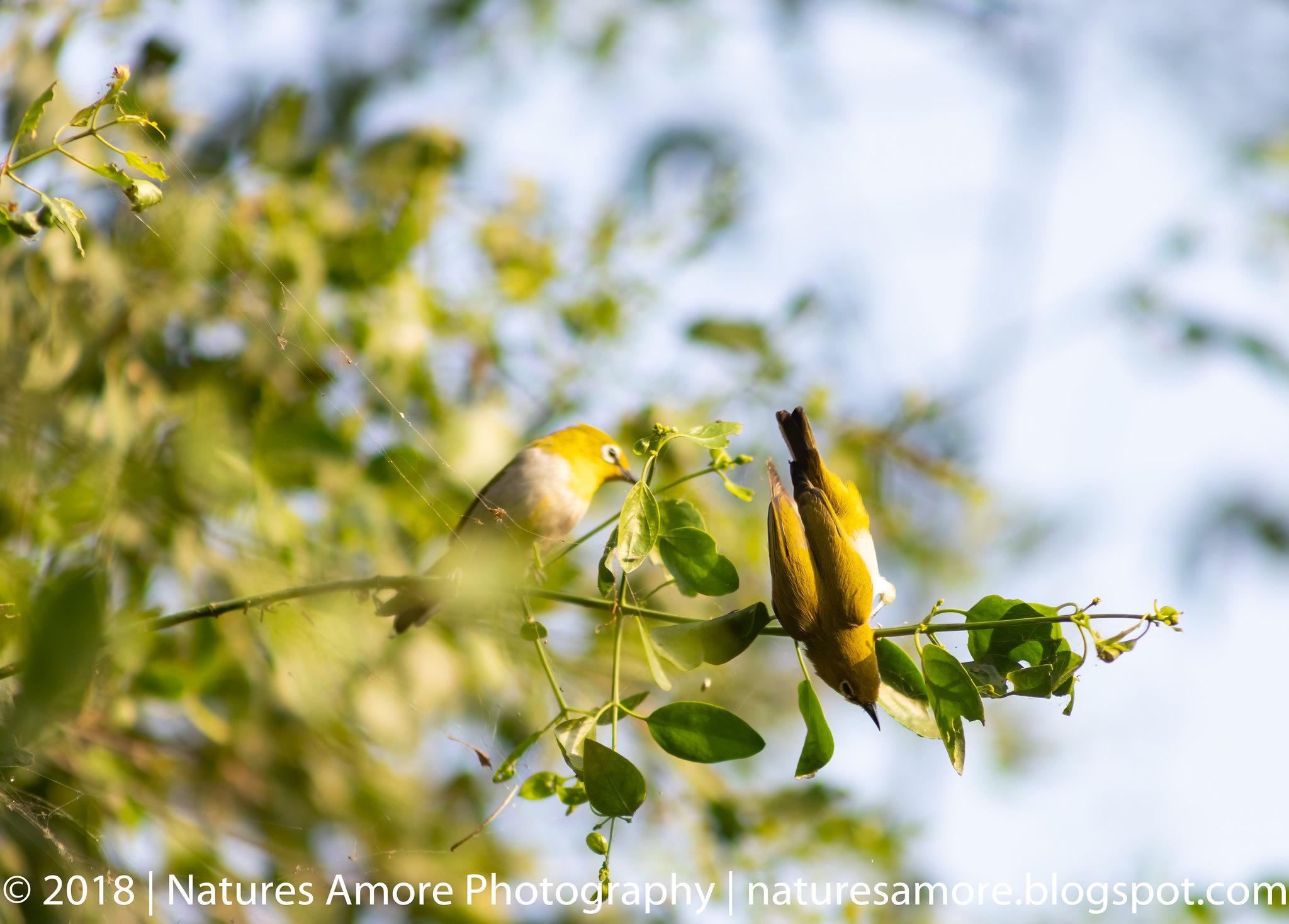 Bharatpur Bird Sanctuary-73