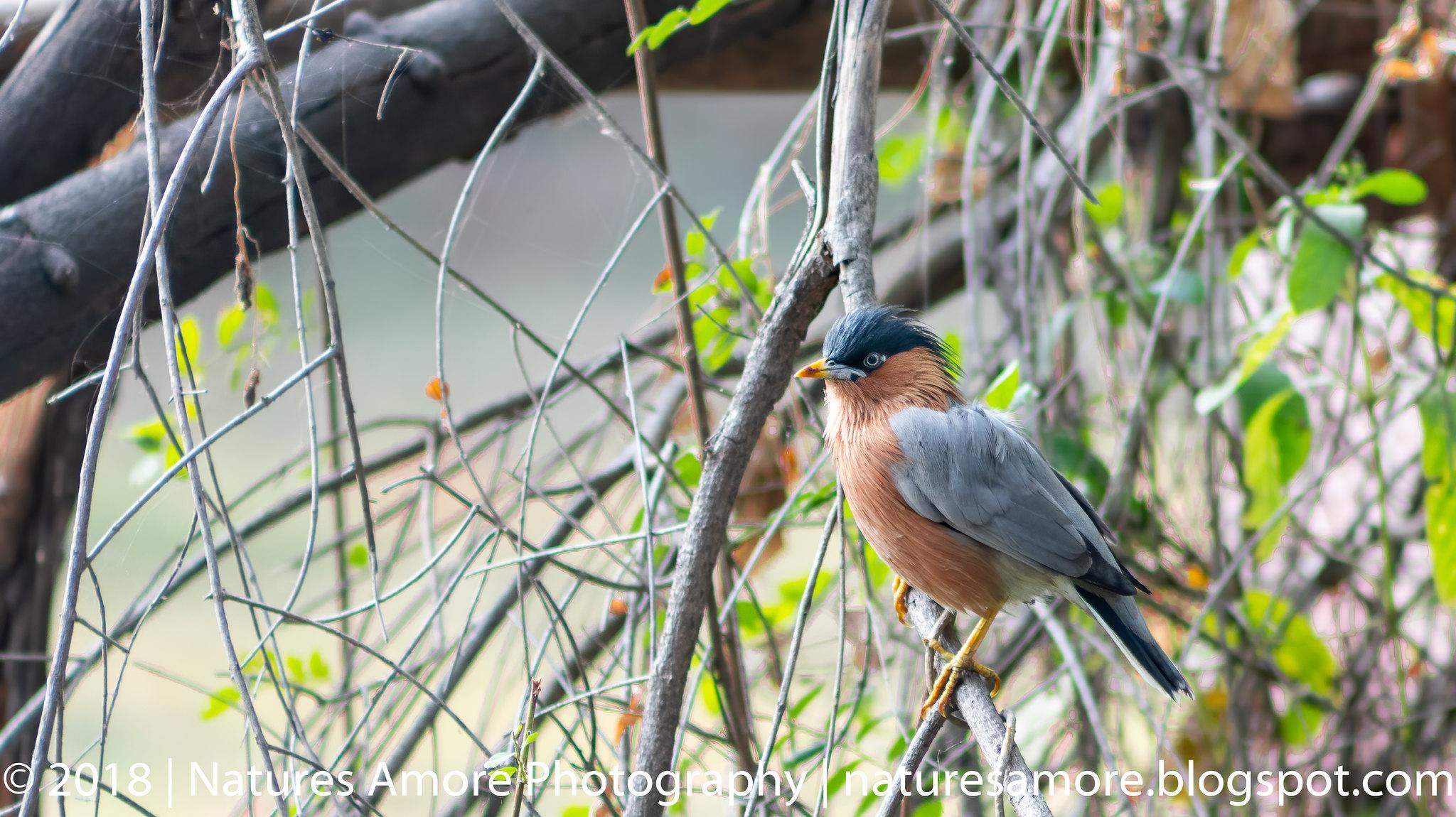 Bharatpur Bird Sanctuary-71