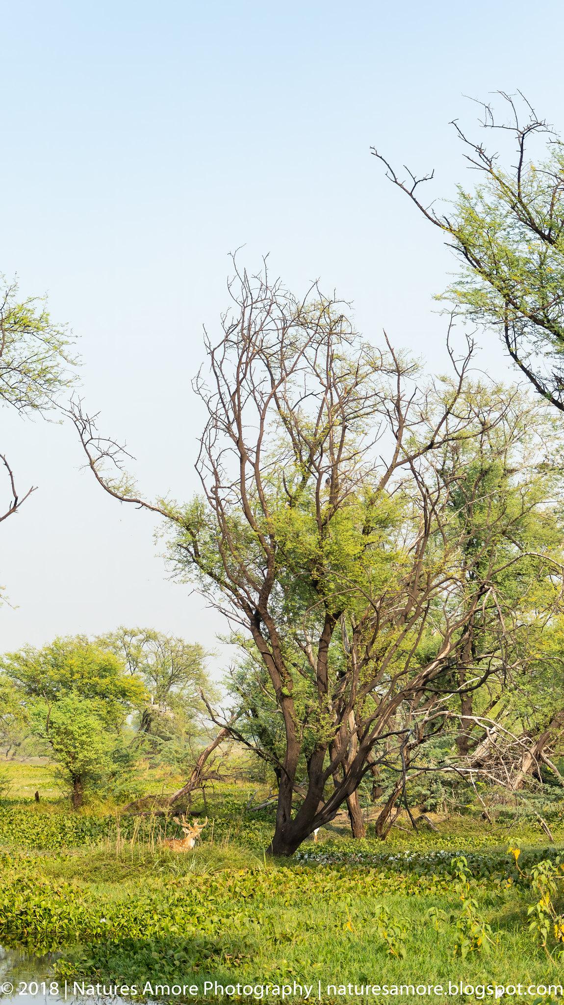 Bharatpur Bird Sanctuary-48