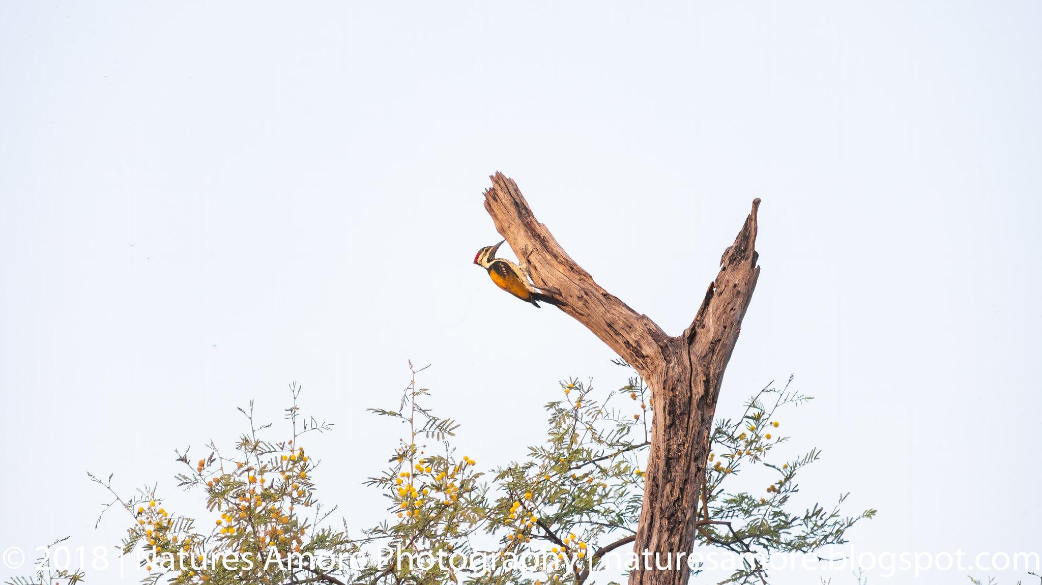 Bharatpur Bird Sanctuary-92