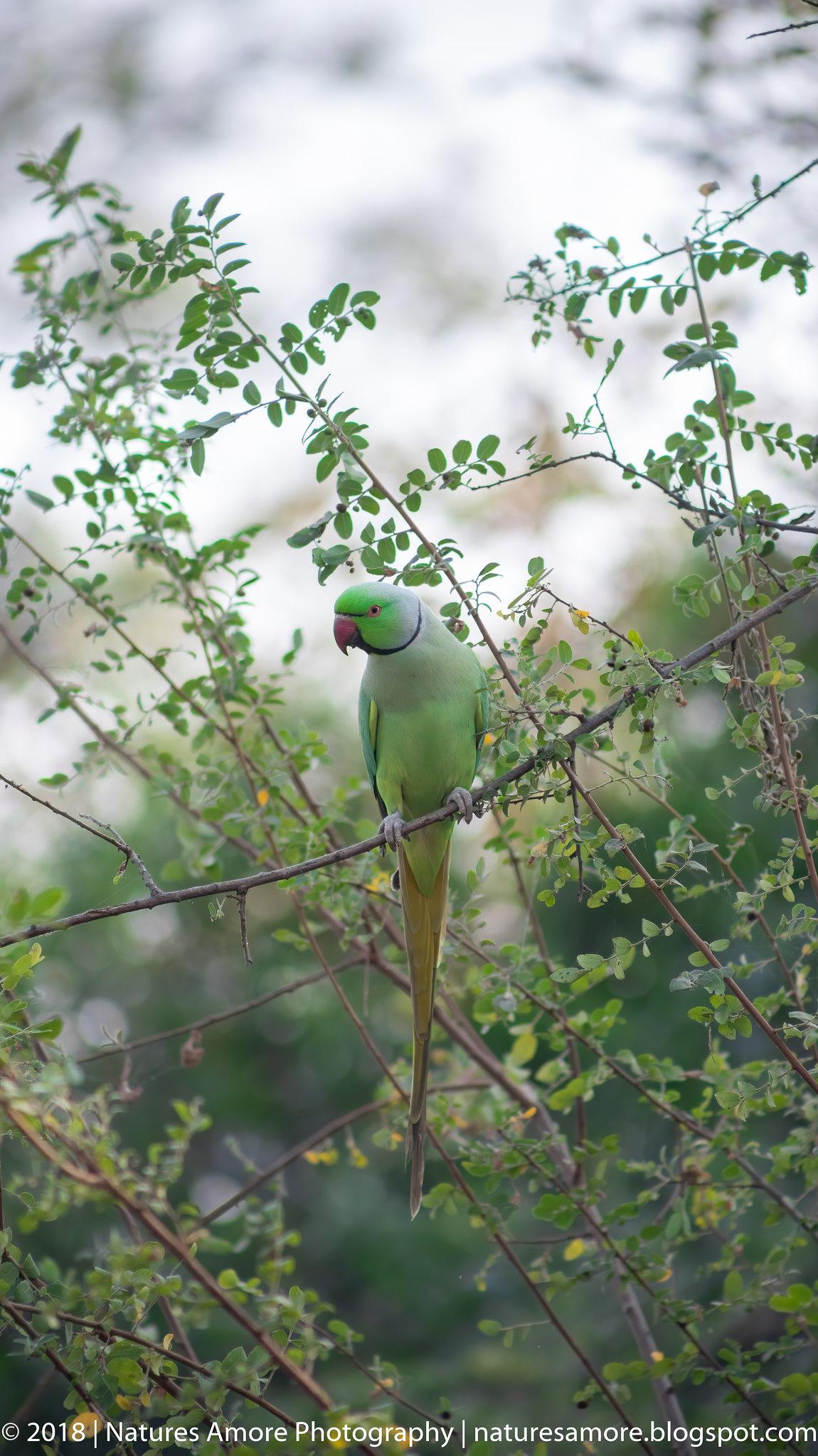 Bharatpur Bird Sanctuary-33