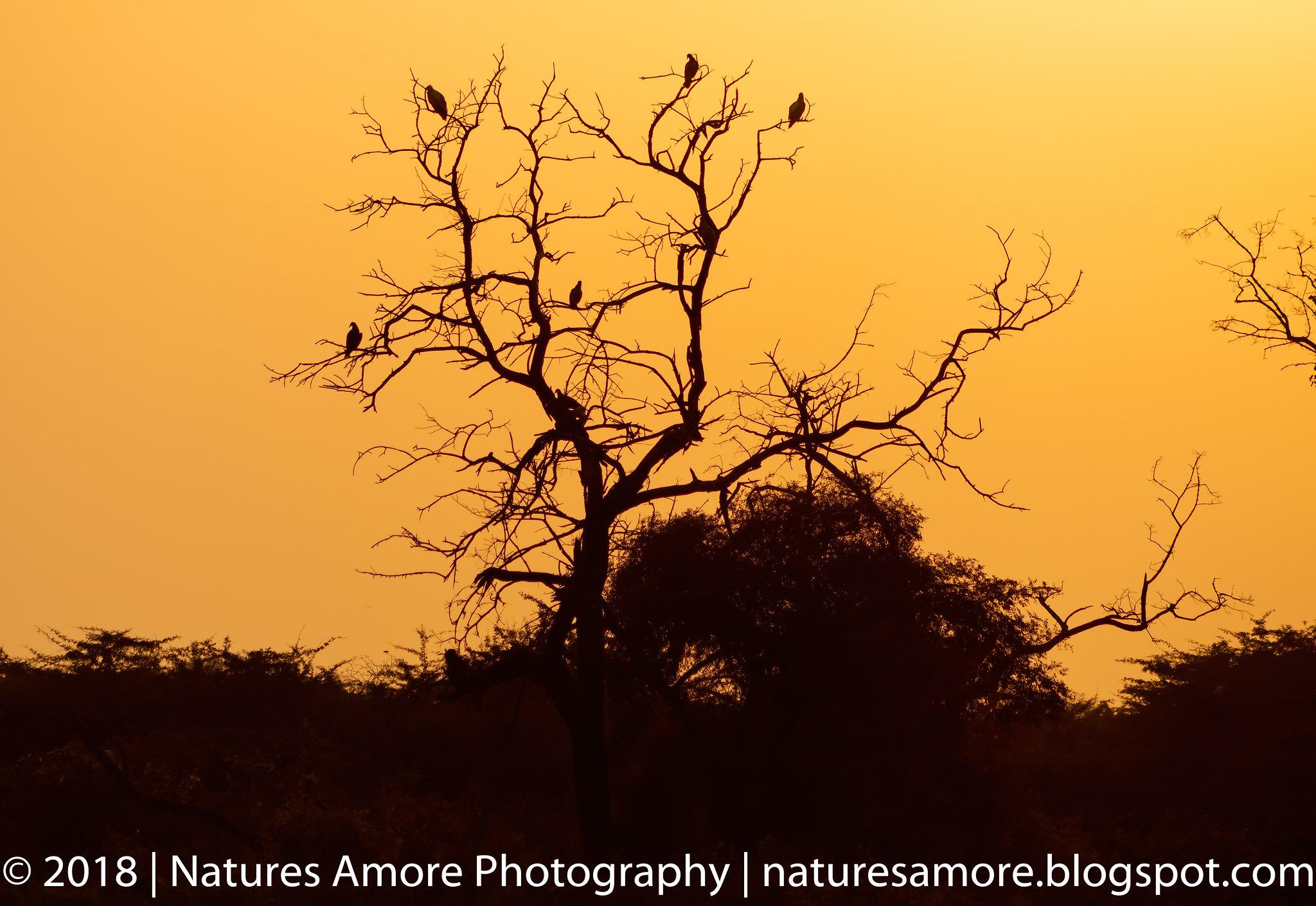 Bharatpur Bird Sanctuary-90