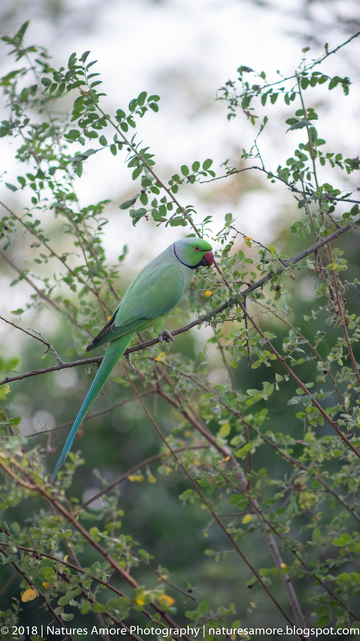 Bharatpur Bird Sanctuary-32