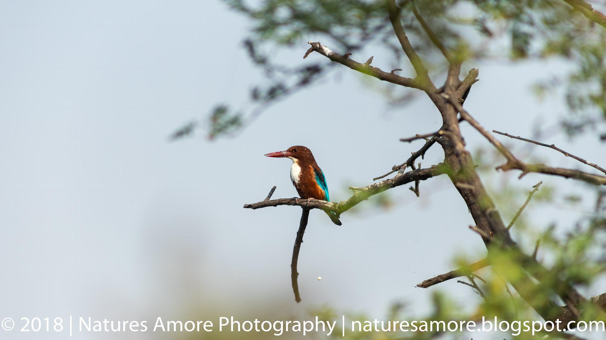 Bharatpur Bird Sanctuary-30