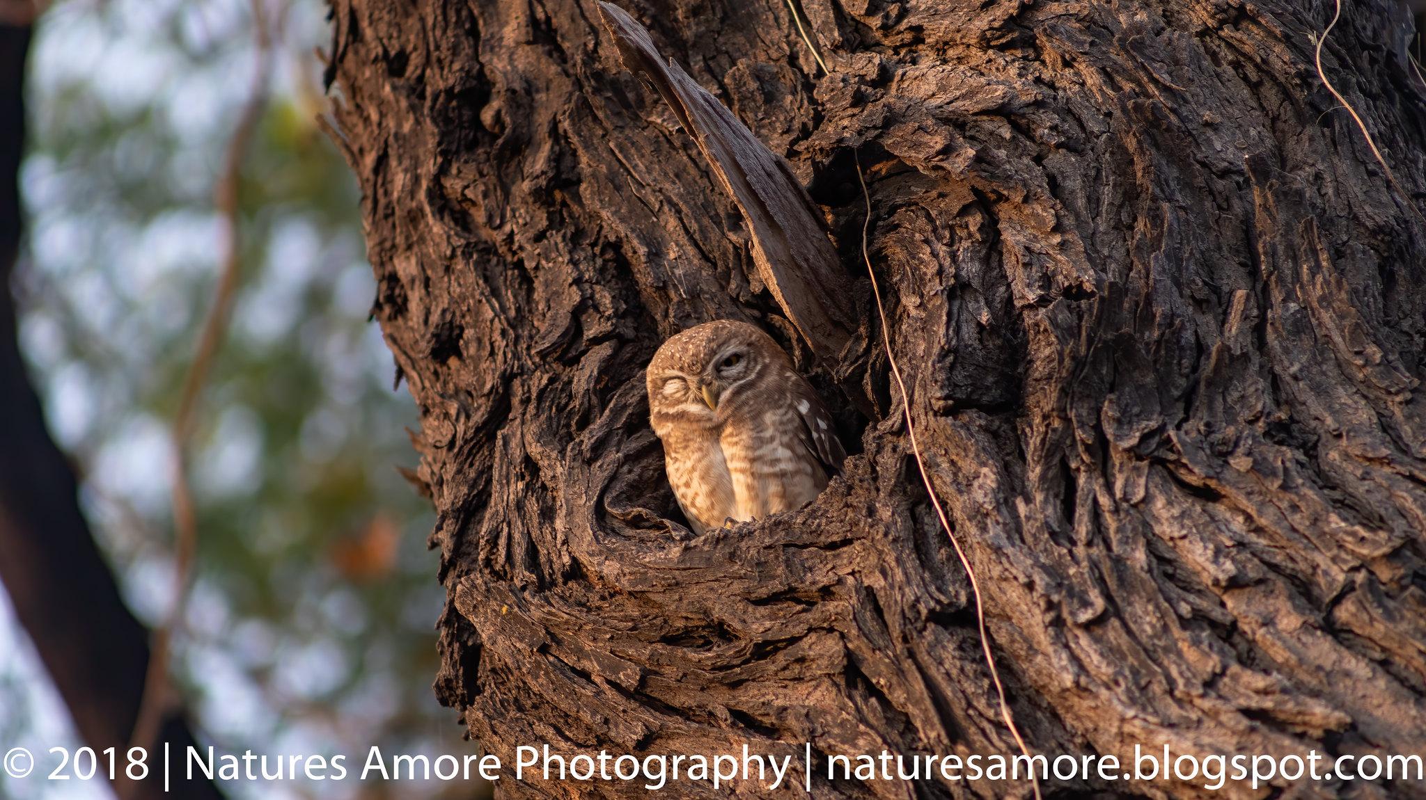 Bharatpur Bird Sanctuary-89