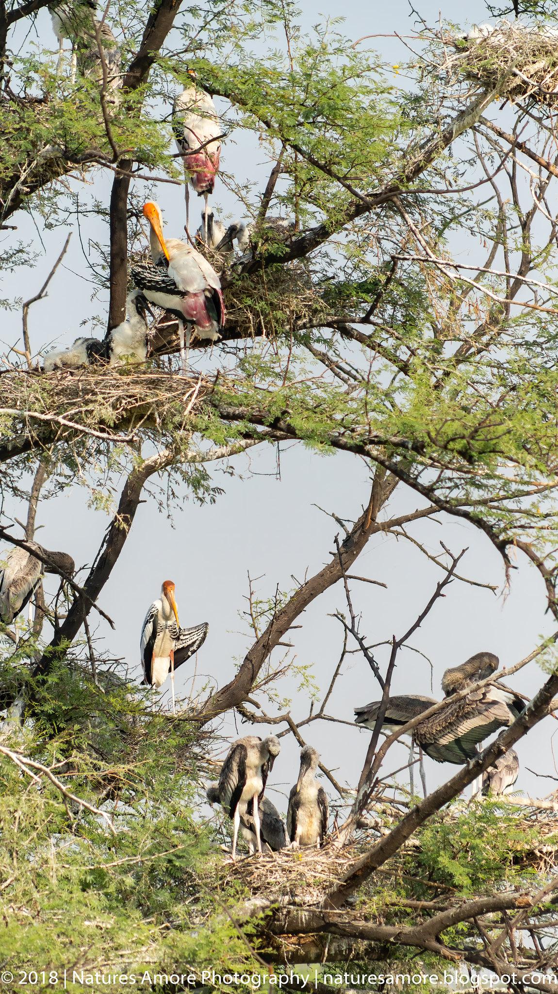 Bharatpur Bird Sanctuary-28