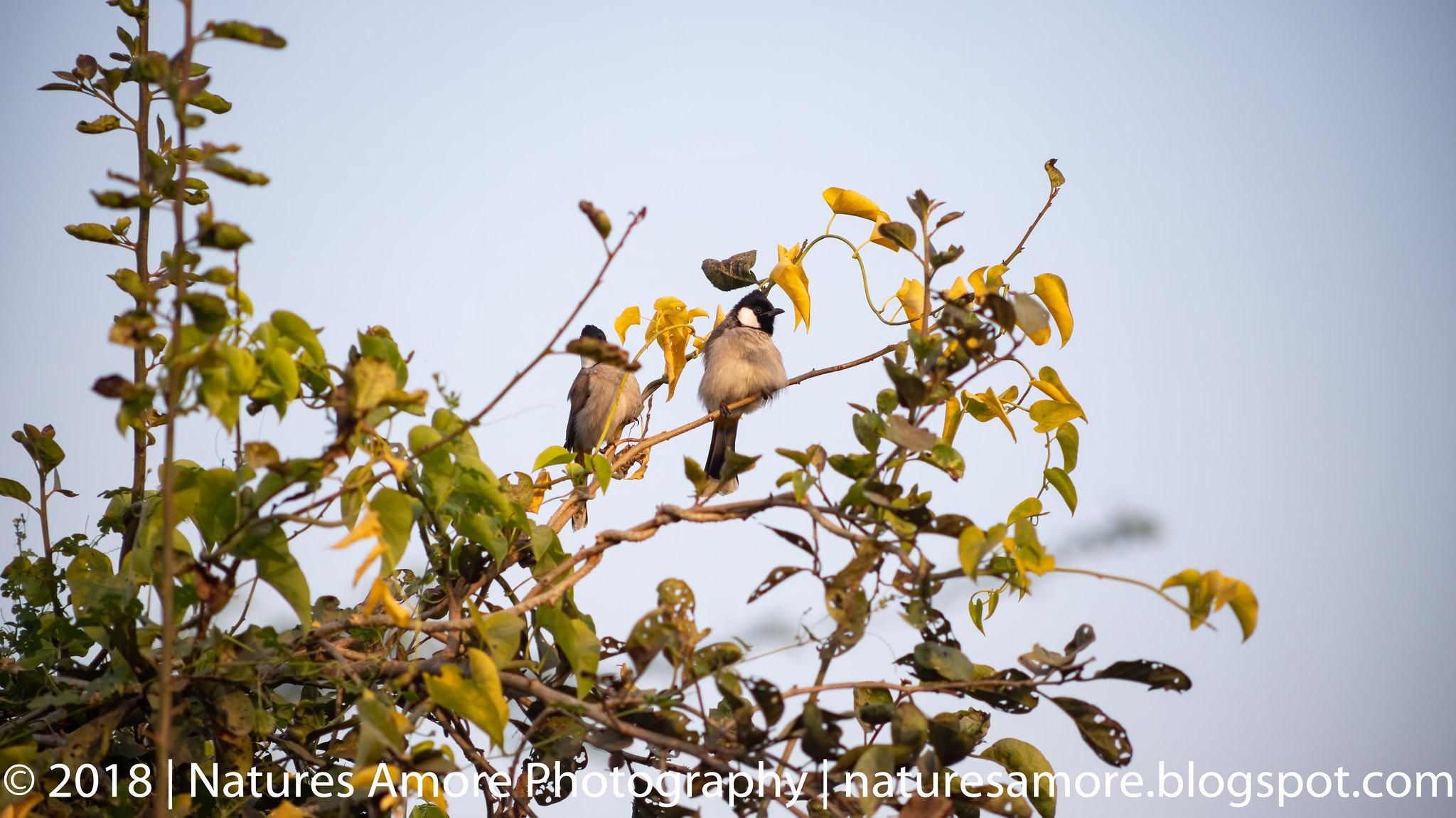 Bharatpur Bird Sanctuary-86
