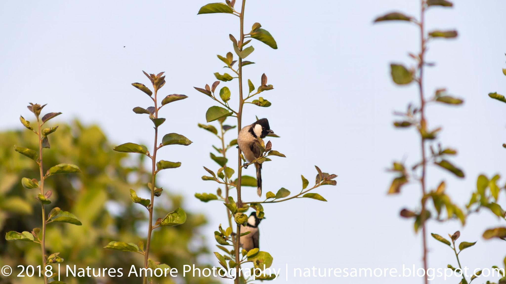 Bharatpur Bird Sanctuary-85