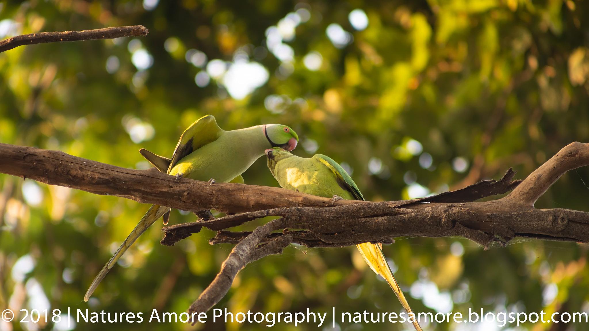 Bharatpur Bird Sanctuary-84