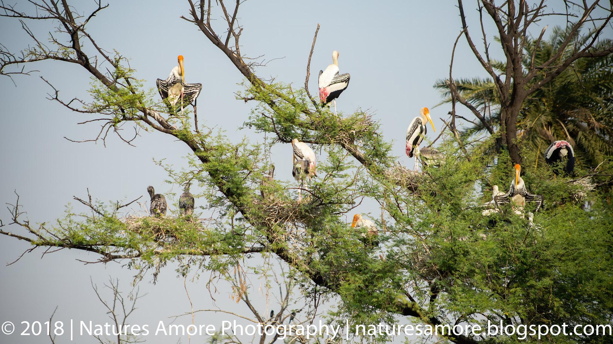 Bharatpur Bird Sanctuary-25