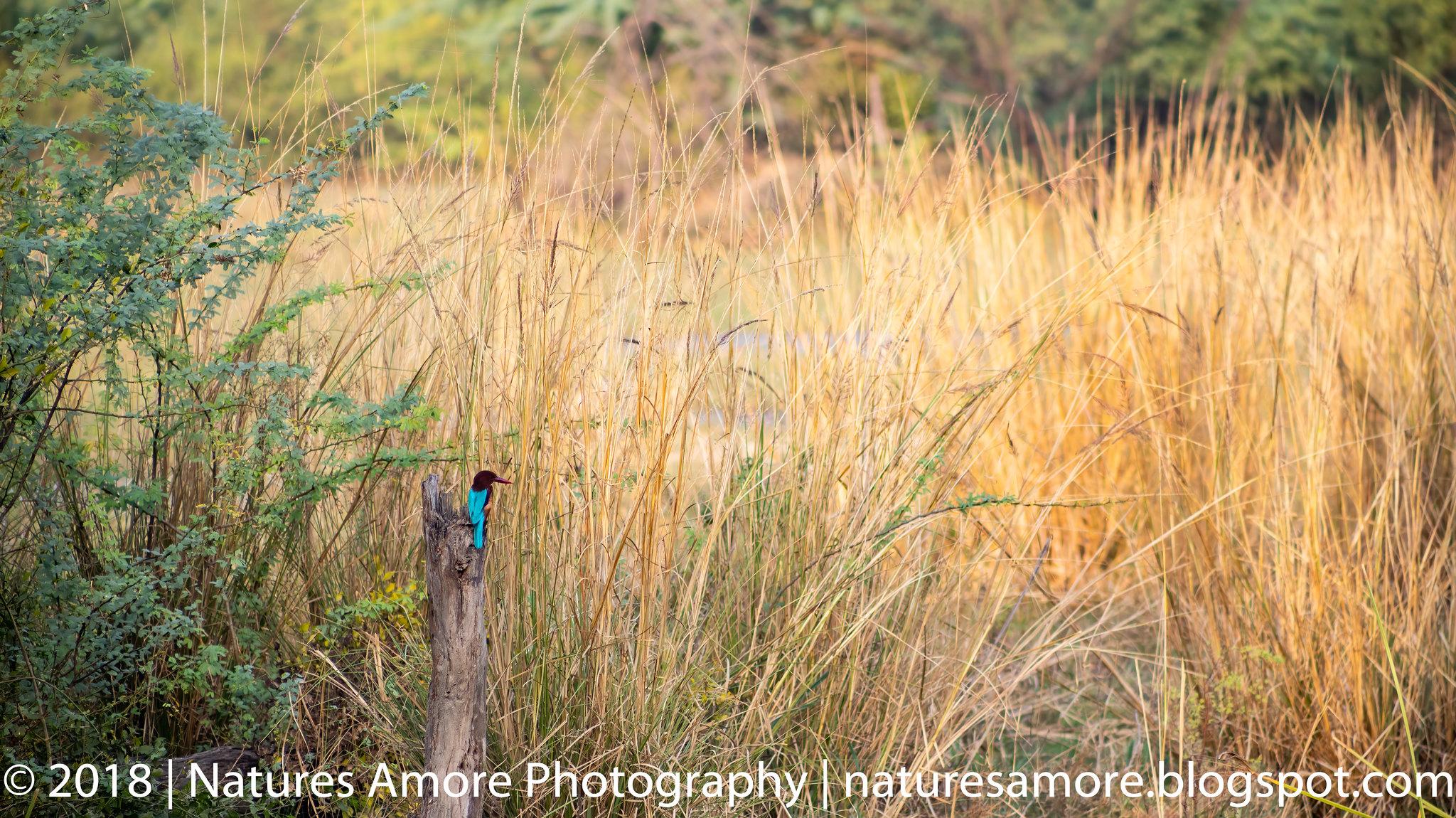Bharatpur Bird Sanctuary-81