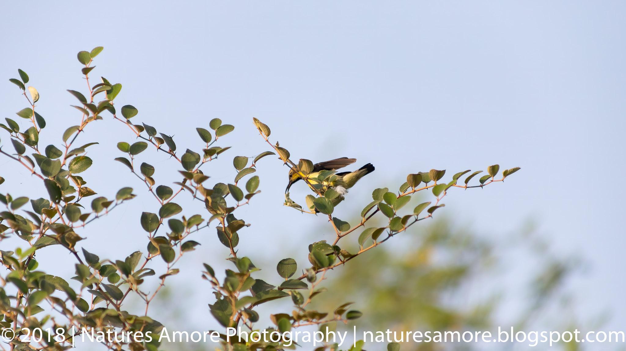 Bharatpur Bird Sanctuary-78