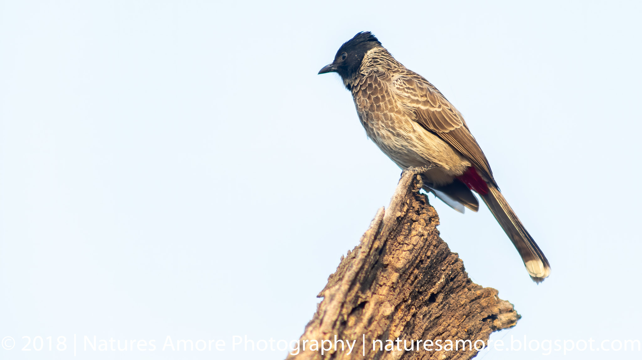 Bharatpur Bird Sanctuary-77