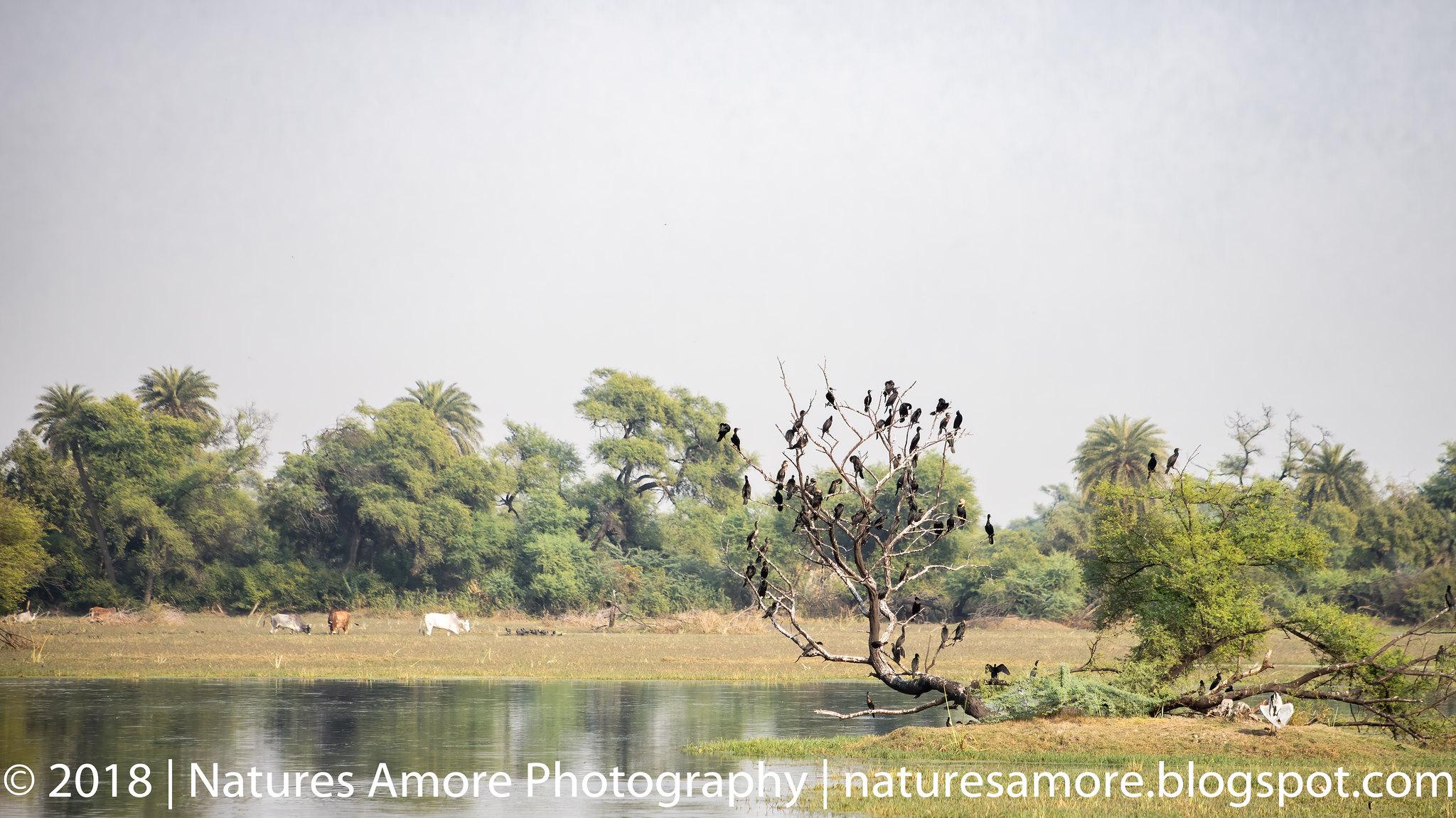 Bharatpur Bird Sanctuary-19