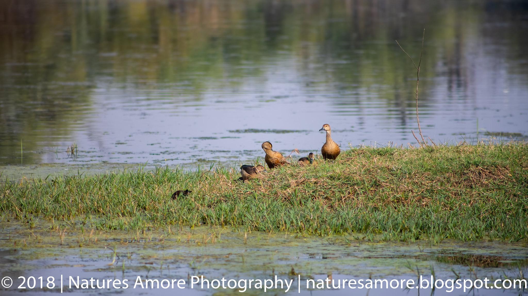 Bharatpur Bird Sanctuary-18