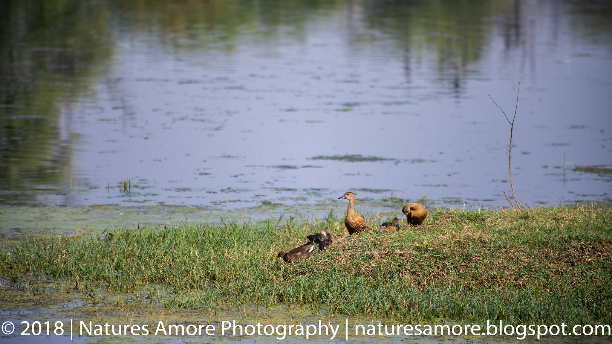 Bharatpur Bird Sanctuary-17