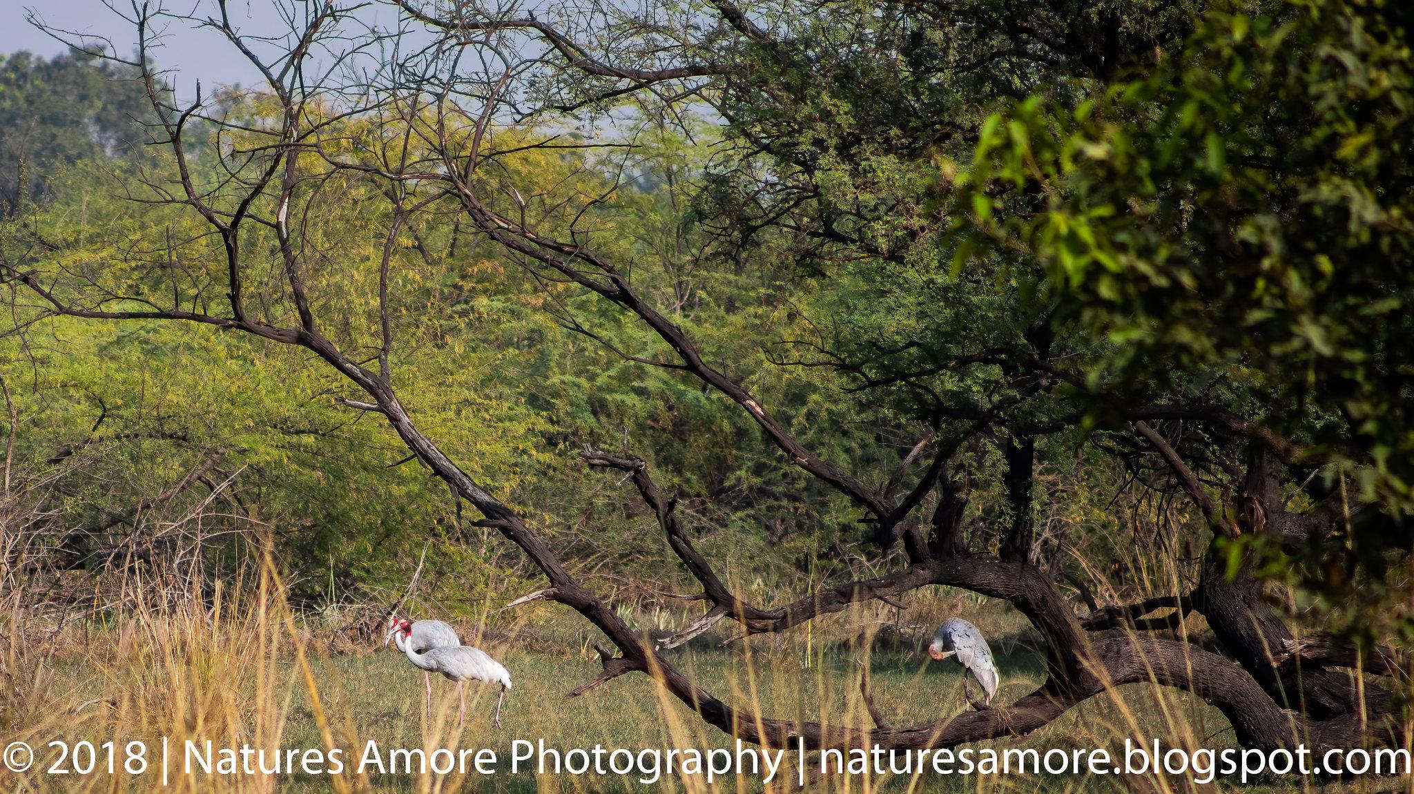 Bharatpur Bird Sanctuary-16