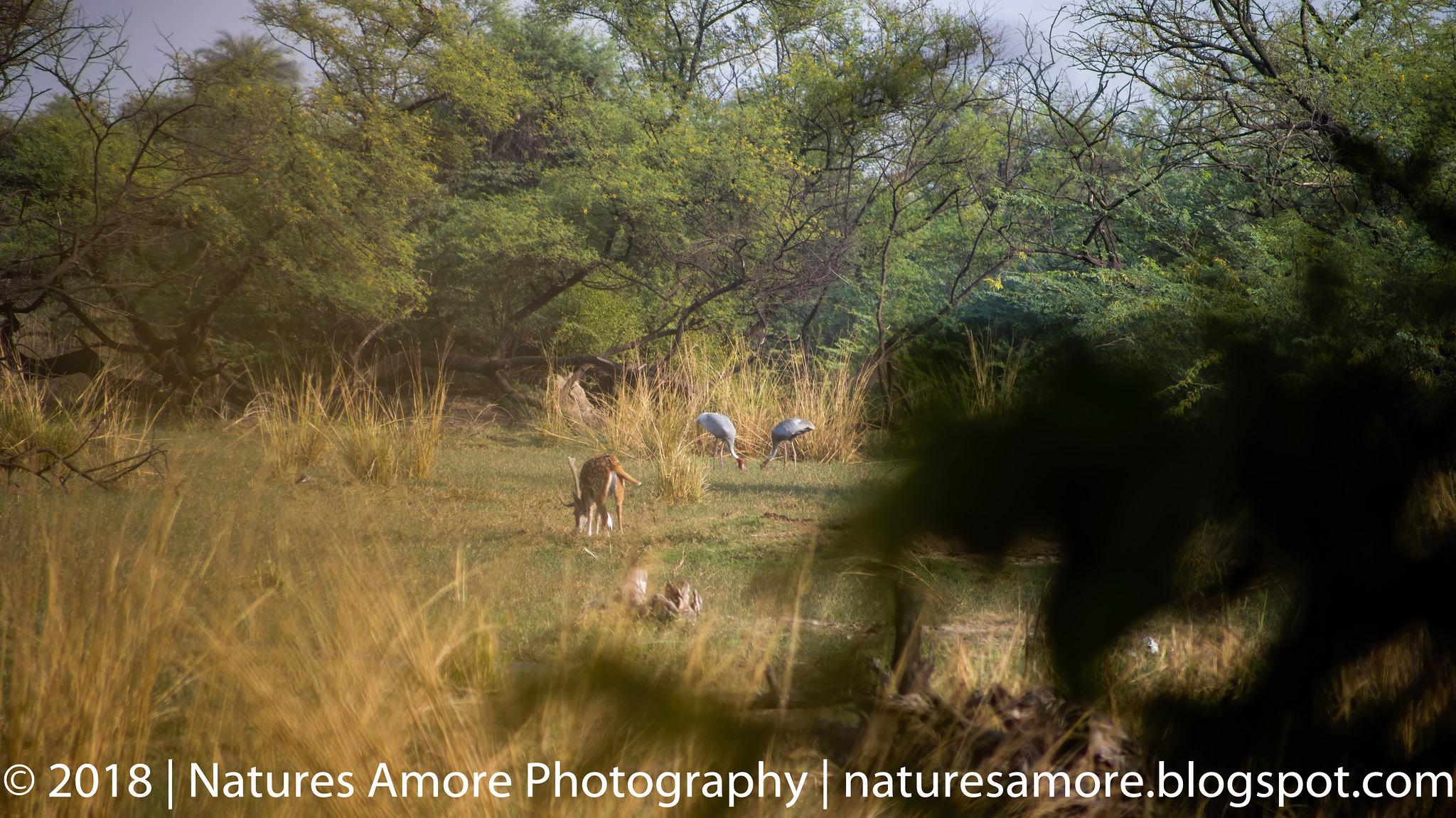Bharatpur Bird Sanctuary-14