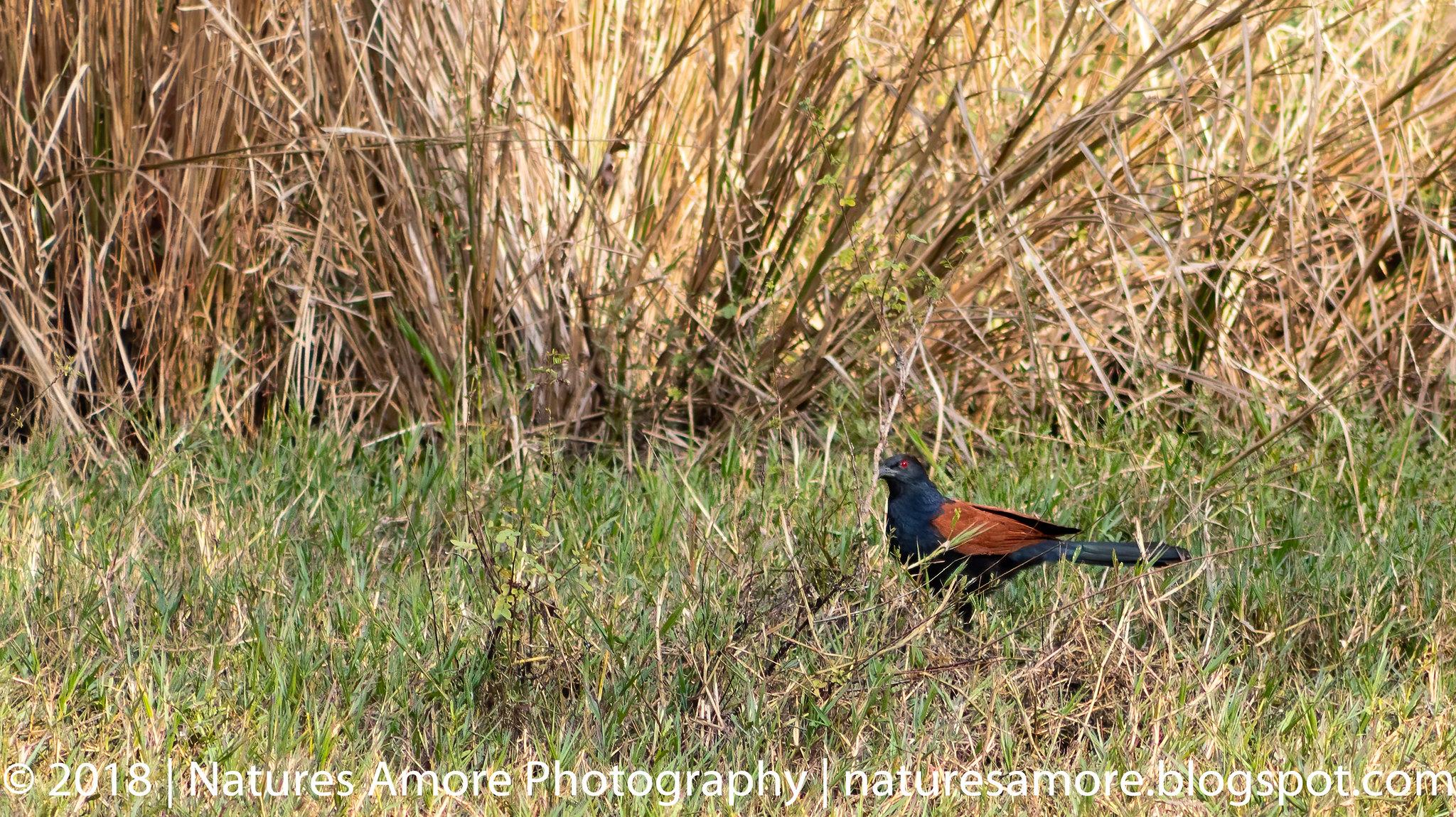 Bharatpur Bird Sanctuary-13