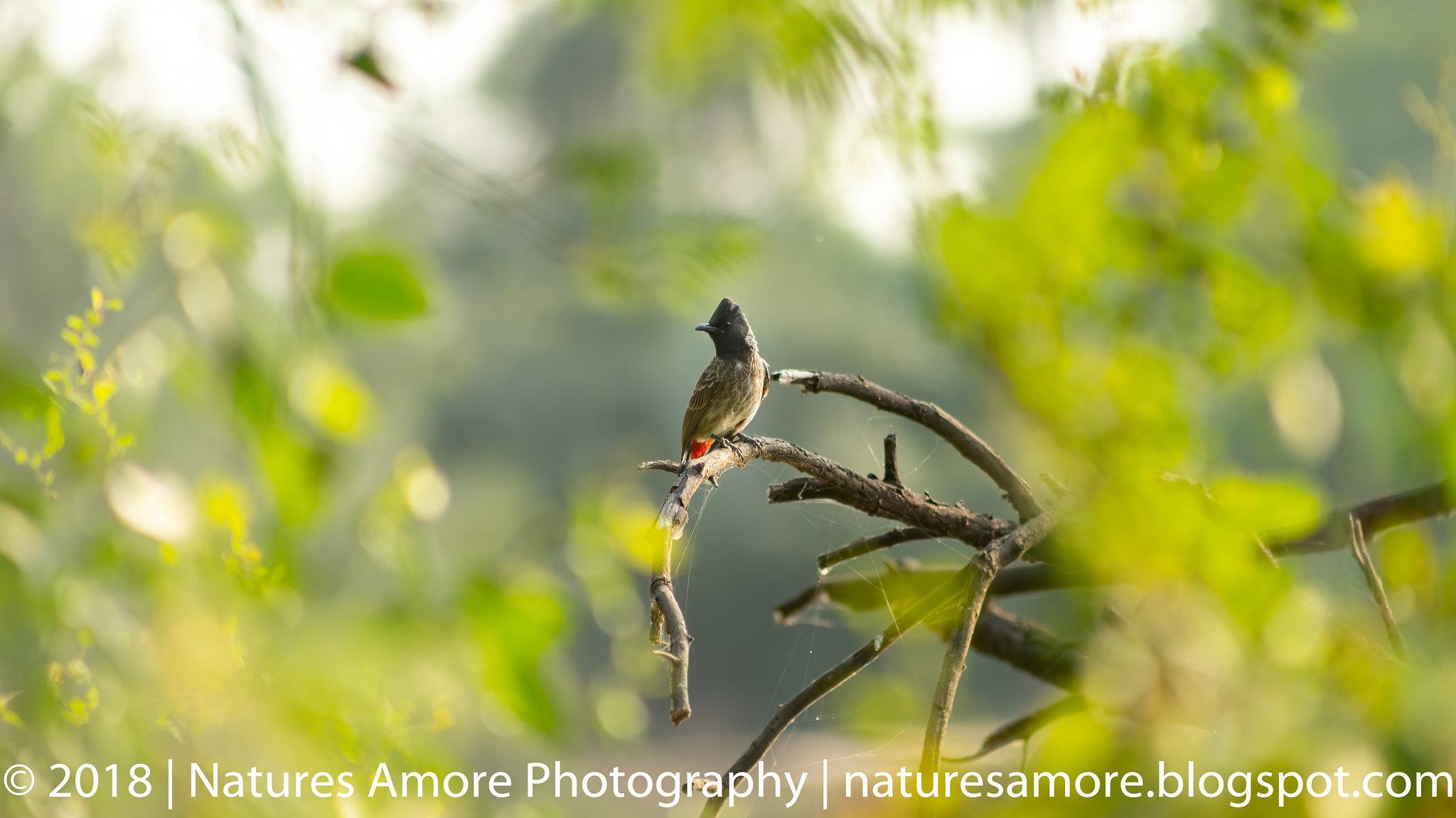Bharatpur Bird Sanctuary-59