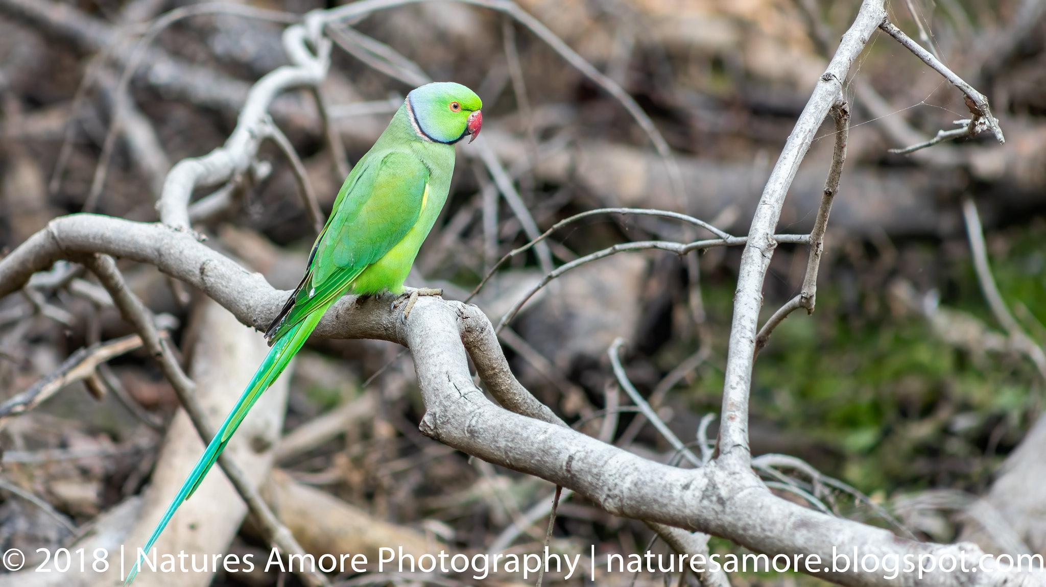 Bharatpur Bird Sanctuary-11
