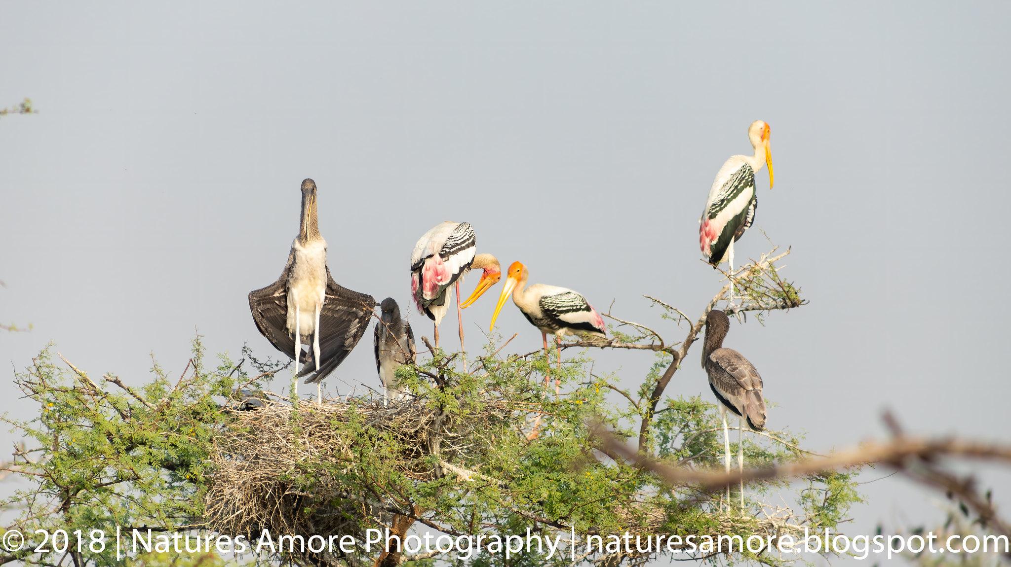 Bharatpur Bird Sanctuary-54