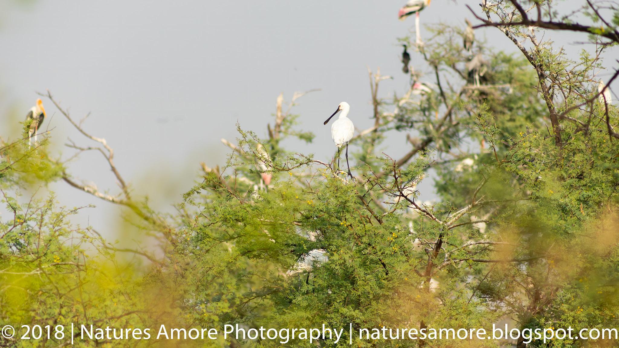 Bharatpur Bird Sanctuary-53