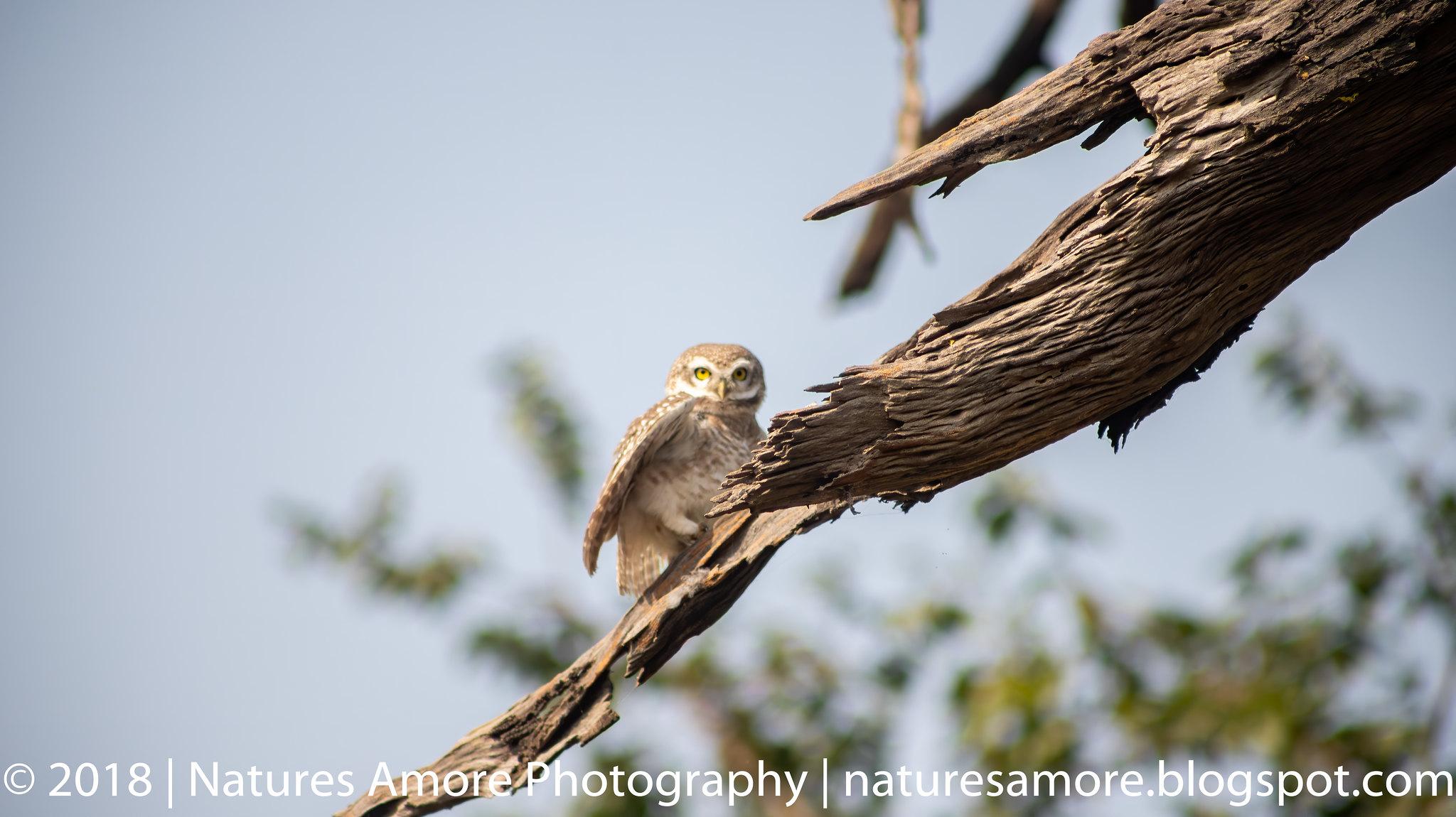 Bharatpur Bird Sanctuary-5