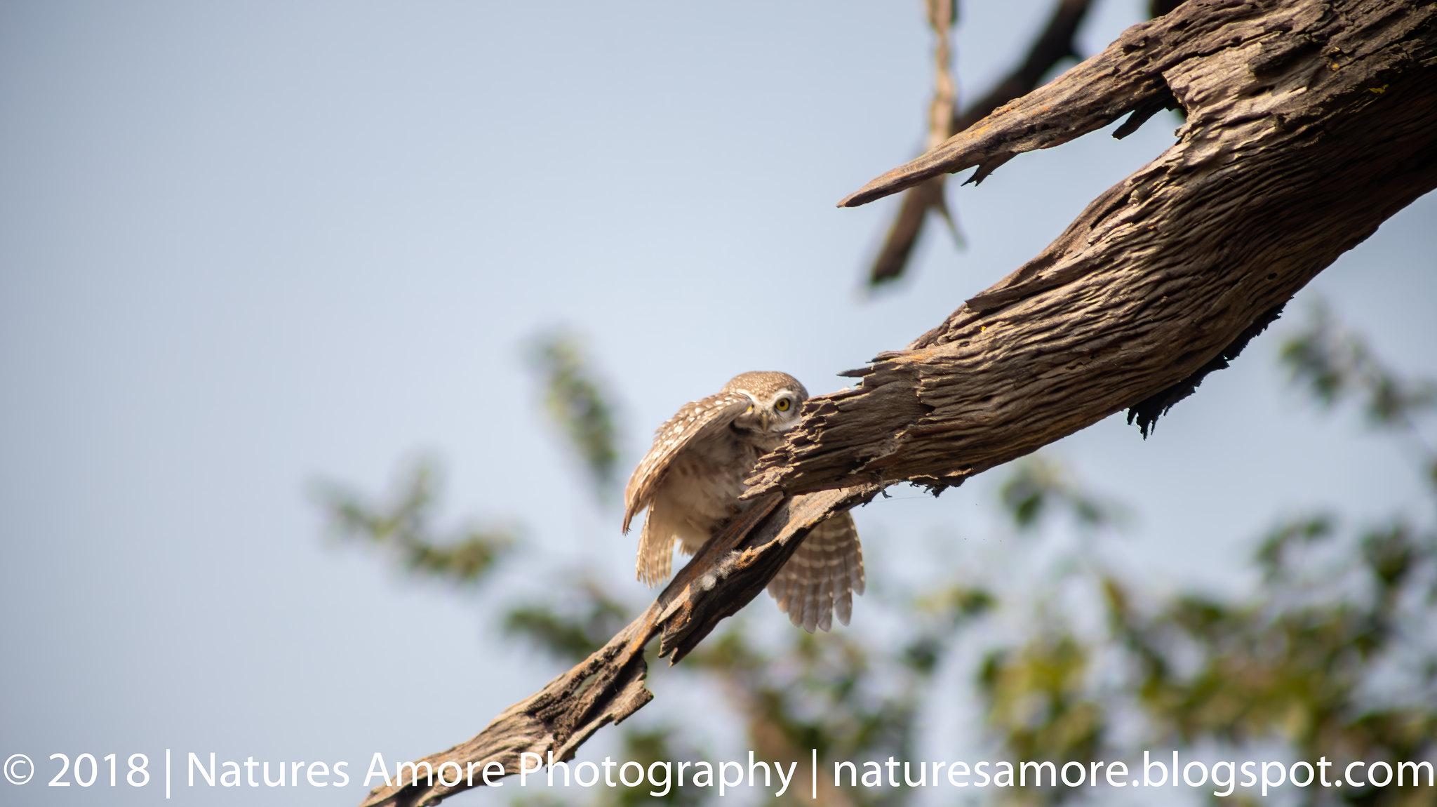 Bharatpur Bird Sanctuary-4