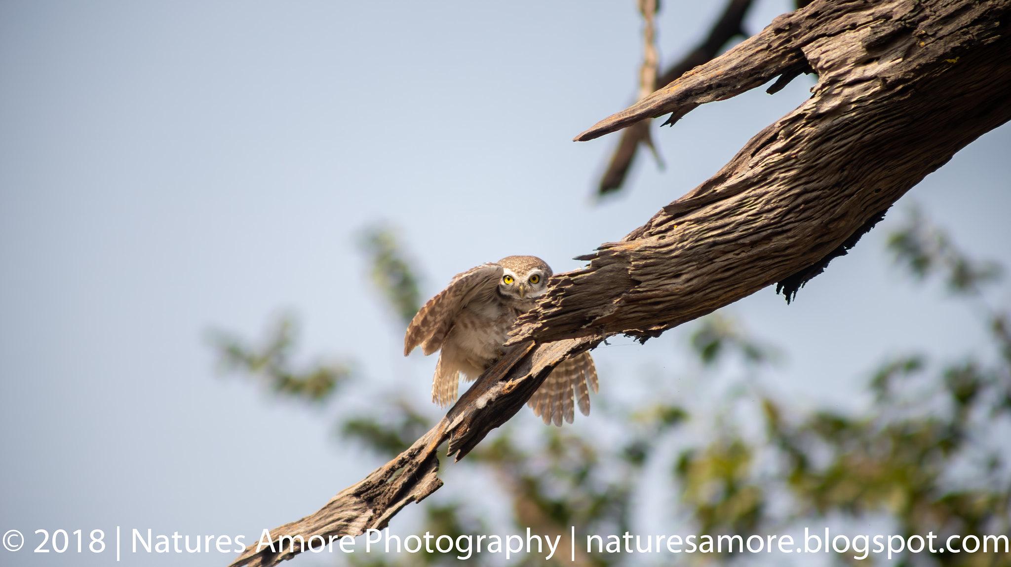 Bharatpur Bird Sanctuary-3