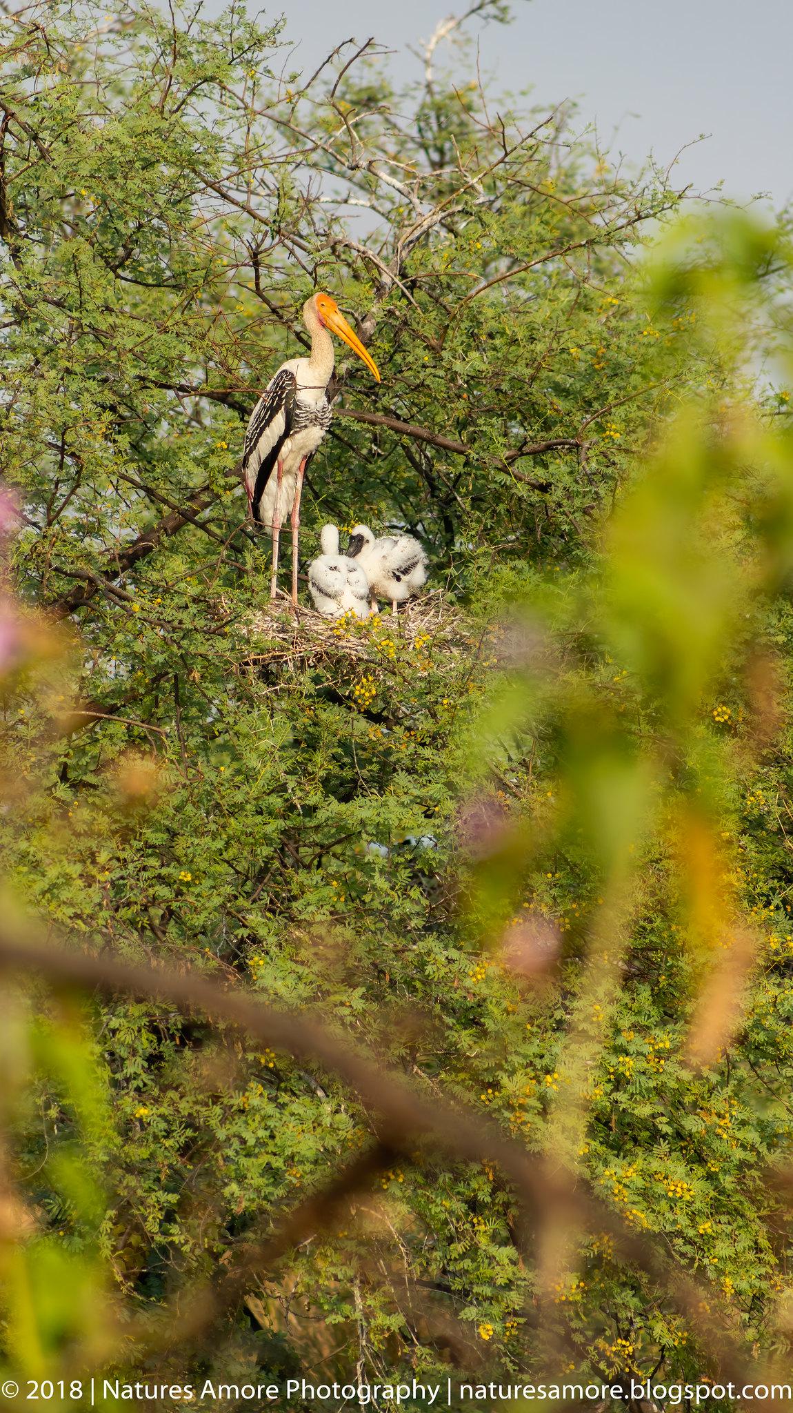 Bharatpur Bird Sanctuary-51