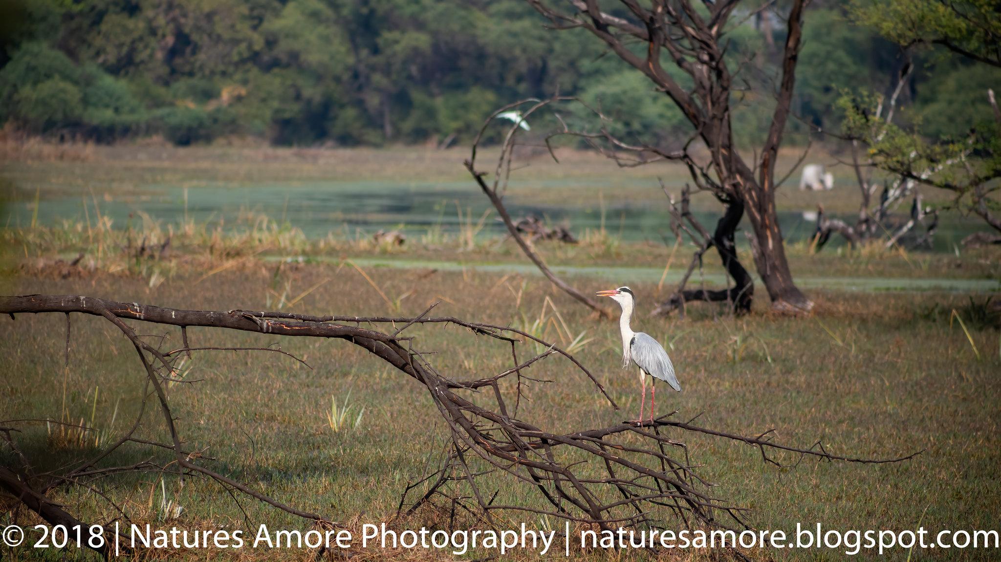 Bharatpur Bird Sanctuary-24