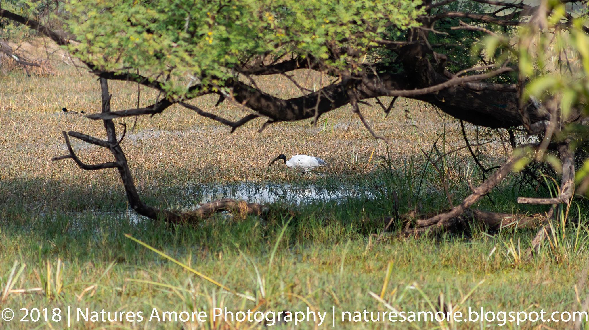 Bharatpur Bird Sanctuary-22