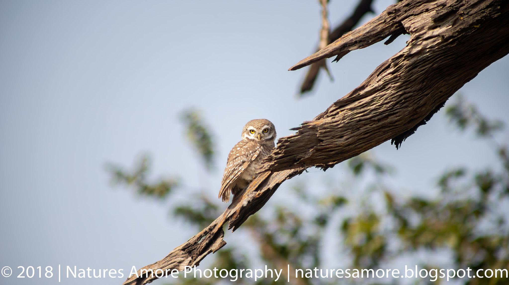 Bharatpur Bird Sanctuary-8