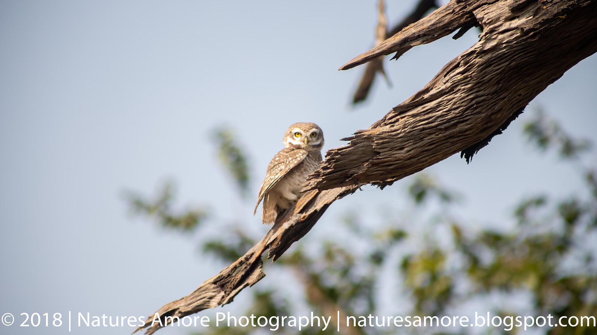 Bharatpur Bird Sanctuary-7